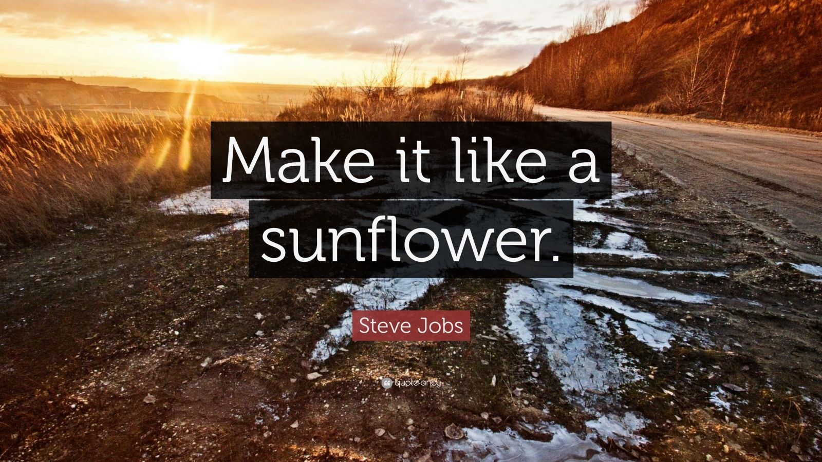 "Steve Jobs Quote: ""Make it like a sunflower."""