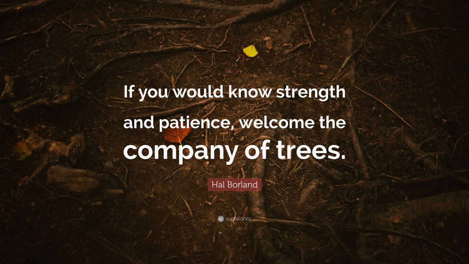 """Hal Borland Quote: """"If you would know strength and patience, welcome the company of trees."""""""