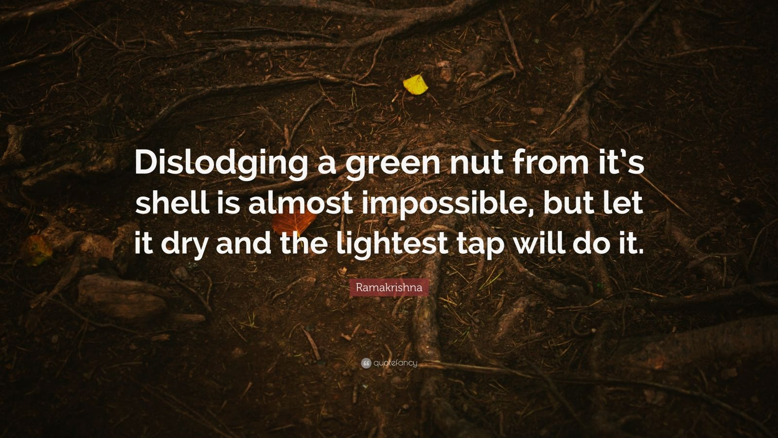 """Ramakrishna Quote: """"Dislodging a green nut from it's shell is almost impossible, but let it dry and the lightest tap will do it."""""""