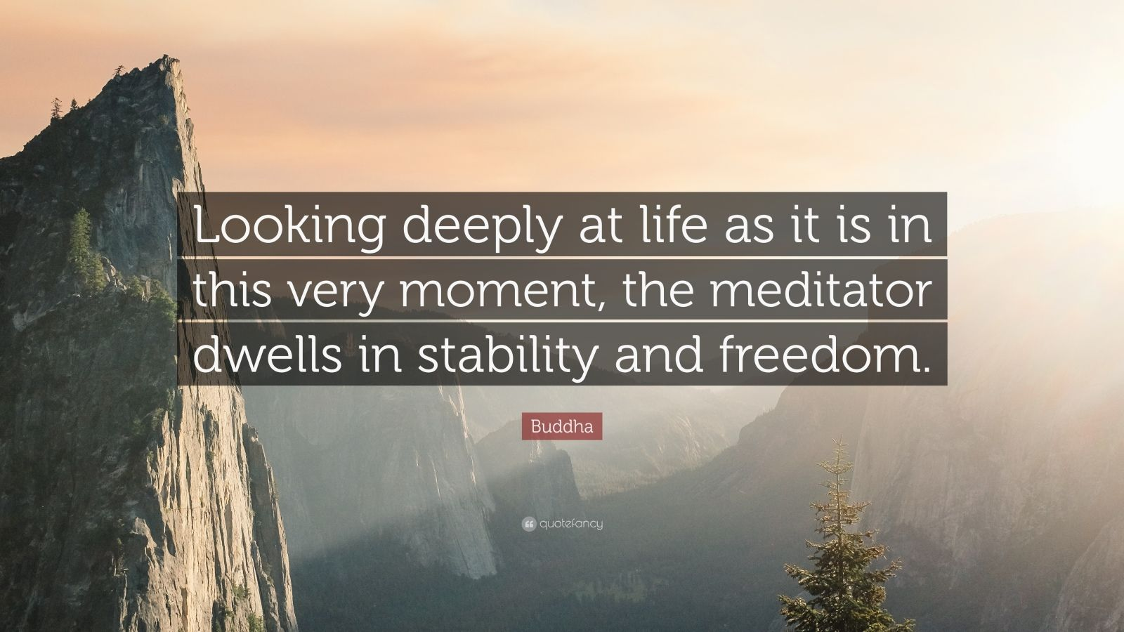 "Buddha Quote: ""Looking deeply at life as it is in this very moment, the meditator dwells in stability and freedom."""