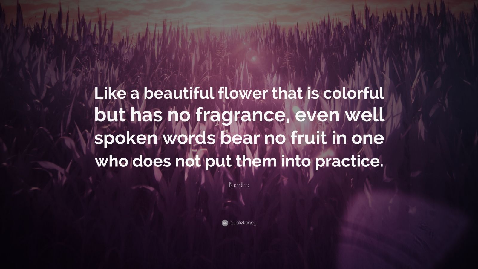"""Buddha Quote: """"Like a beautiful flower that is colorful but has no fragrance, even well spoken words bear no fruit in one who does not put them into practice."""""""