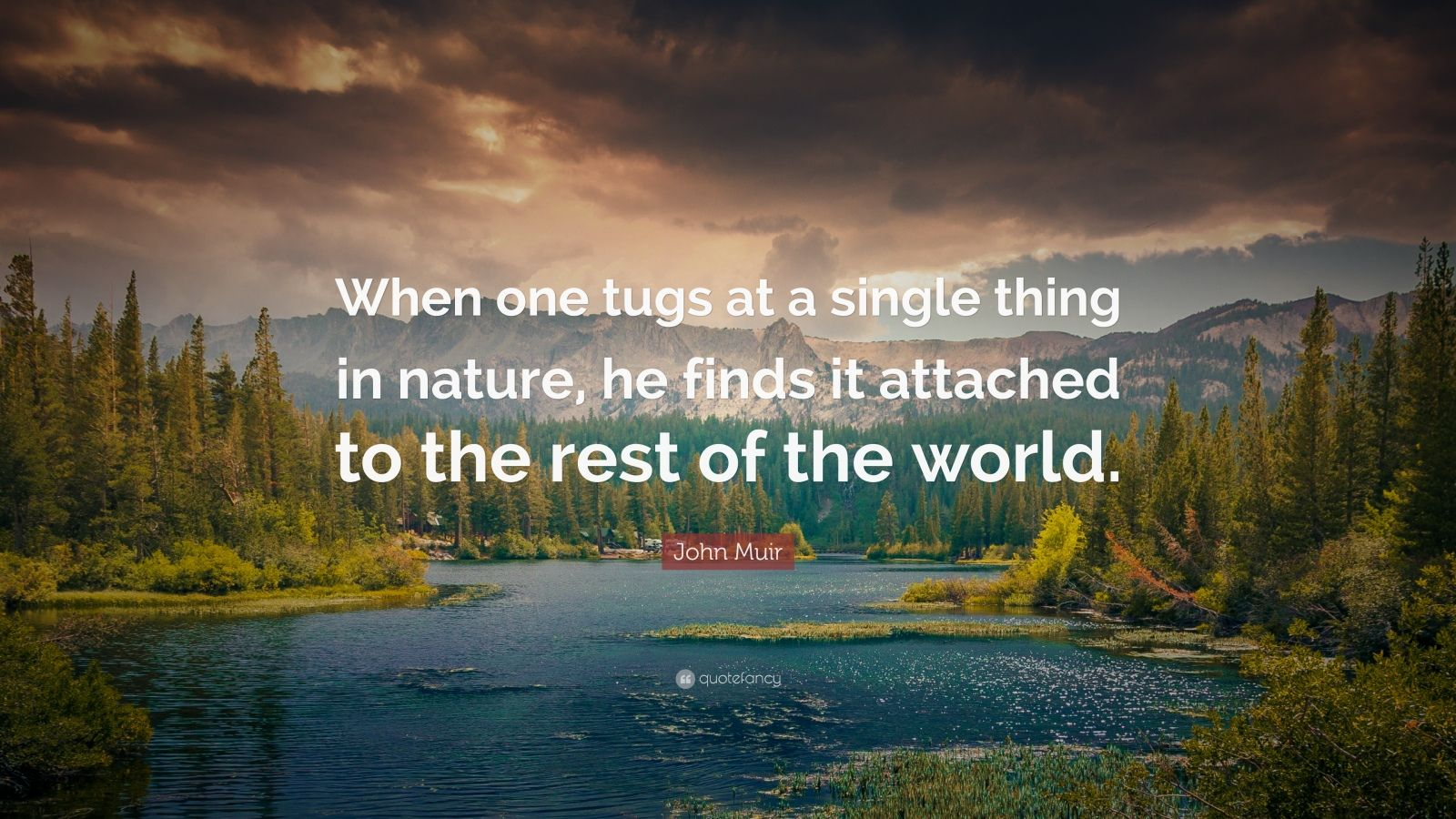 """John Muir Quote: """"When one tugs at a single thing in ..."""