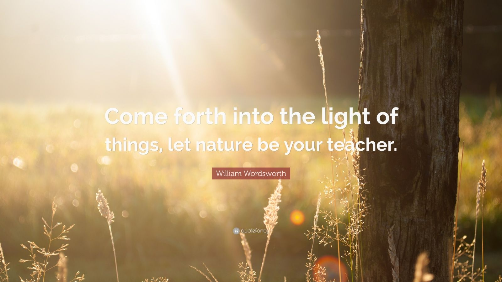 "William Wordsworth Quote: ""Come forth into the light of things, let nature be your teacher."""