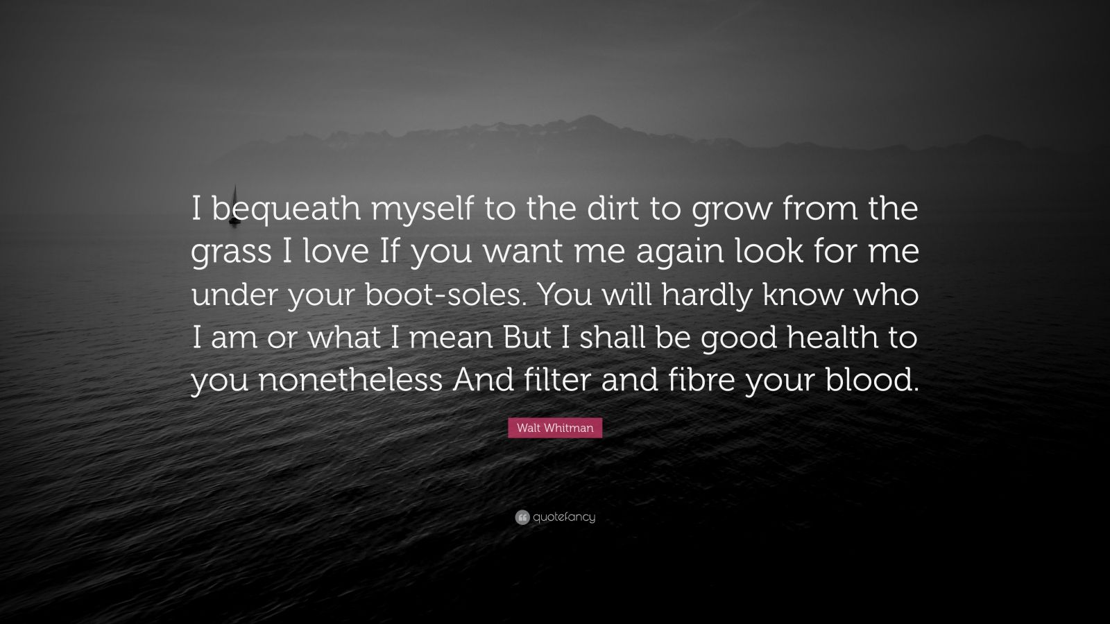 """Walt Whitman Quote: """"I bequeath myself to the dirt to grow from the grass I love If you want me again look for me under your boot-soles. You will hardly know who I am or what I mean But I shall be good health to you nonetheless And filter and fibre your blood."""""""