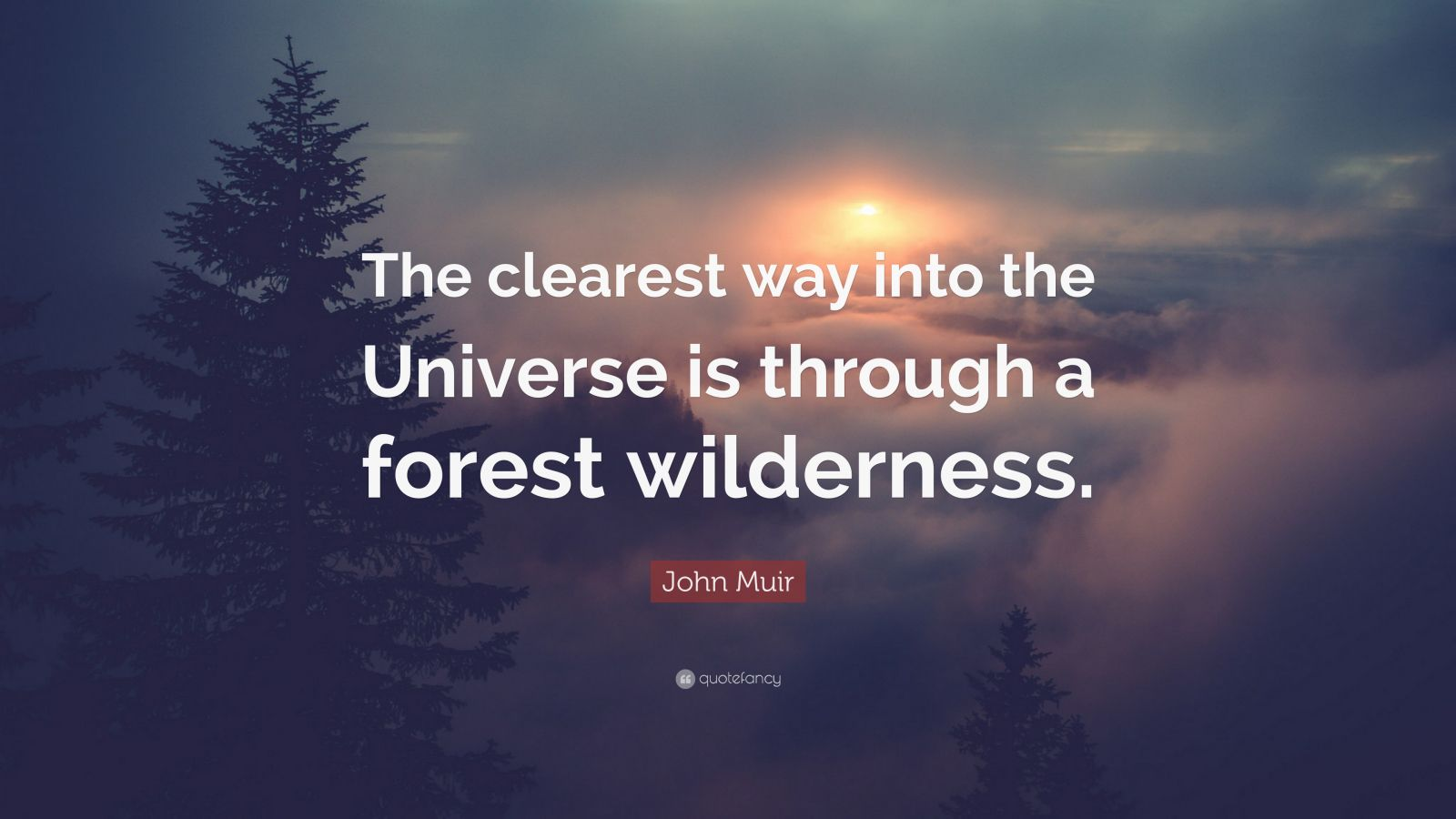 "John Muir Quote: ""The clearest way into the Universe is through a forest wilderness."""