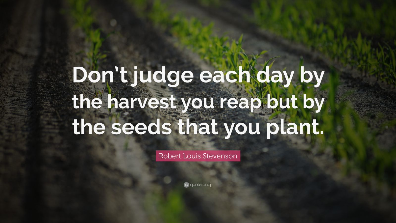 """Robert Louis Stevenson Quote: """"Don't judge each day by the harvest you reap but by the seeds that you plant."""""""