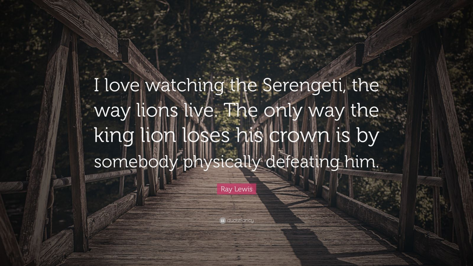 Ray Lewis Quote I Love Watching The Serengeti Way Lions Live
