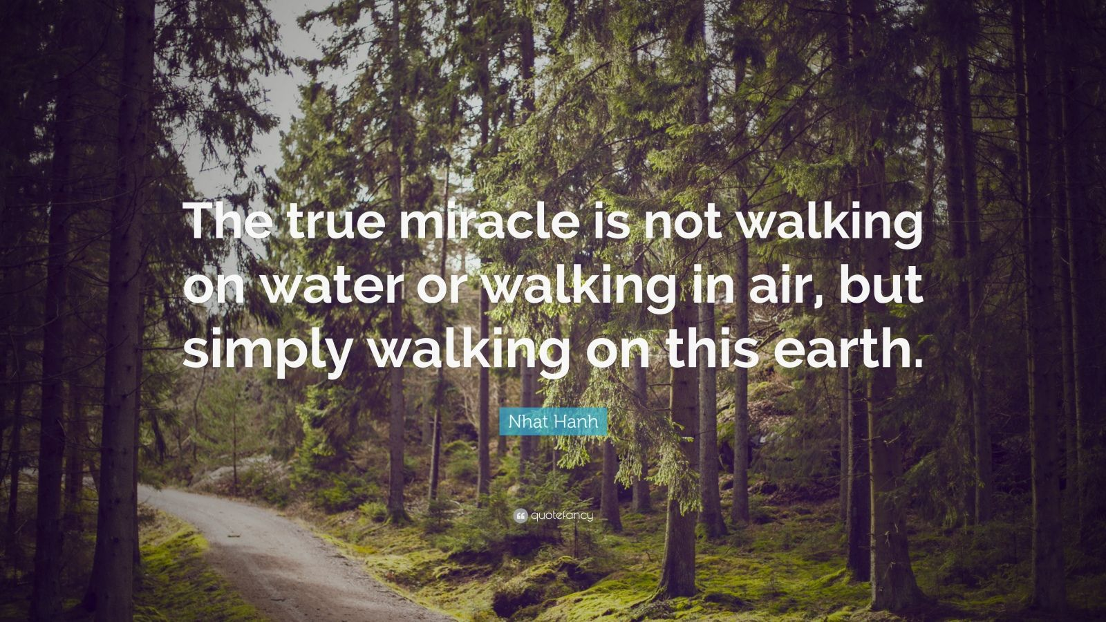 """Nhat Hanh Quote: """"The true miracle is not walking on water or walking in air, but simply walking on this earth."""""""