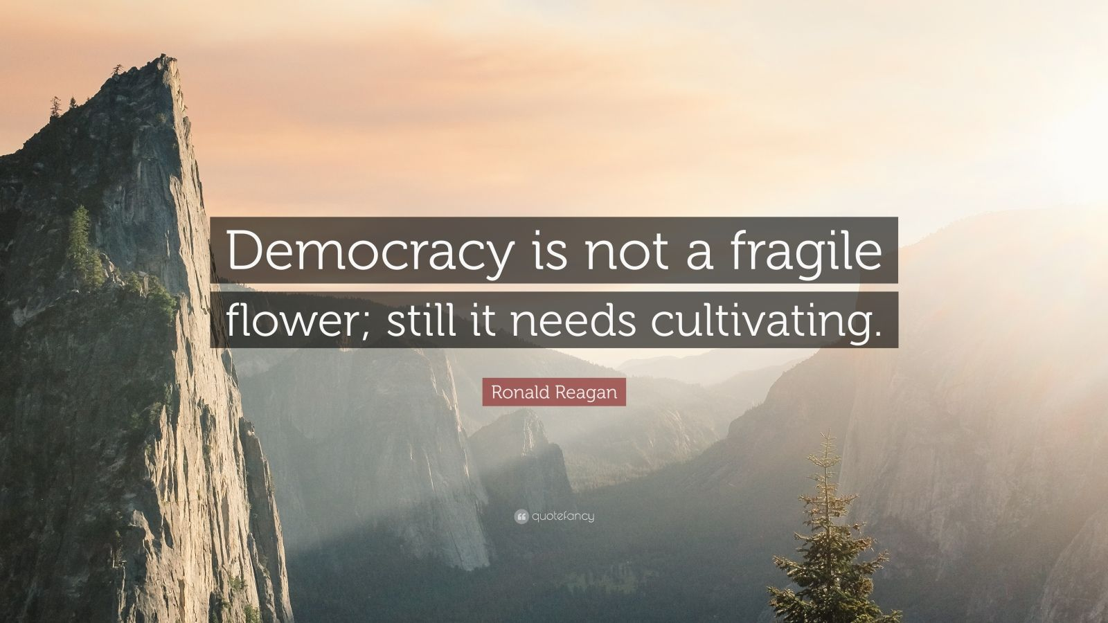 "Ronald Reagan Quote: ""Democracy is not a fragile flower; still it needs cultivating."""