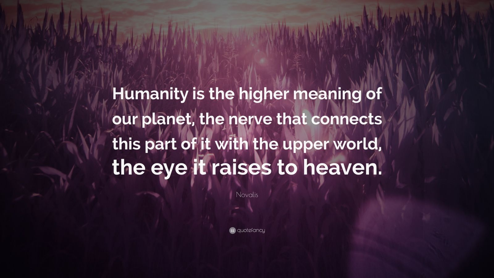 "Novalis Quote: ""Humanity is the higher meaning of our planet, the nerve that connects this part of it with the upper world, the eye it raises to heaven."""