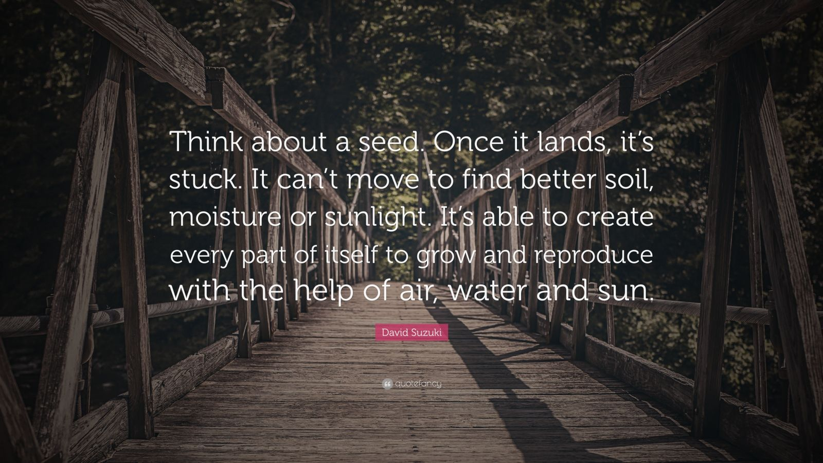 """David Suzuki Quote: """"Think about a seed. Once it lands, it's stuck. It can't move to find better soil, moisture or sunlight. It's able to create every part of itself to grow and reproduce with the help of air, water and sun."""""""