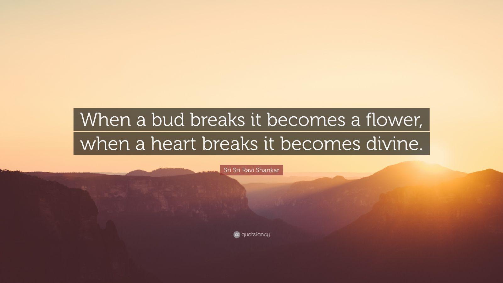 "Sri Sri Ravi Shankar Quote: ""When a bud breaks it becomes a flower, when a heart breaks it becomes divine."""