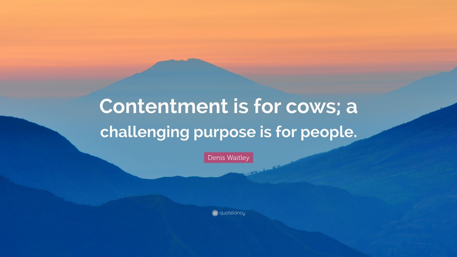 """Denis Waitley Quote: """"Contentment is for cows; a challenging purpose is for people."""""""