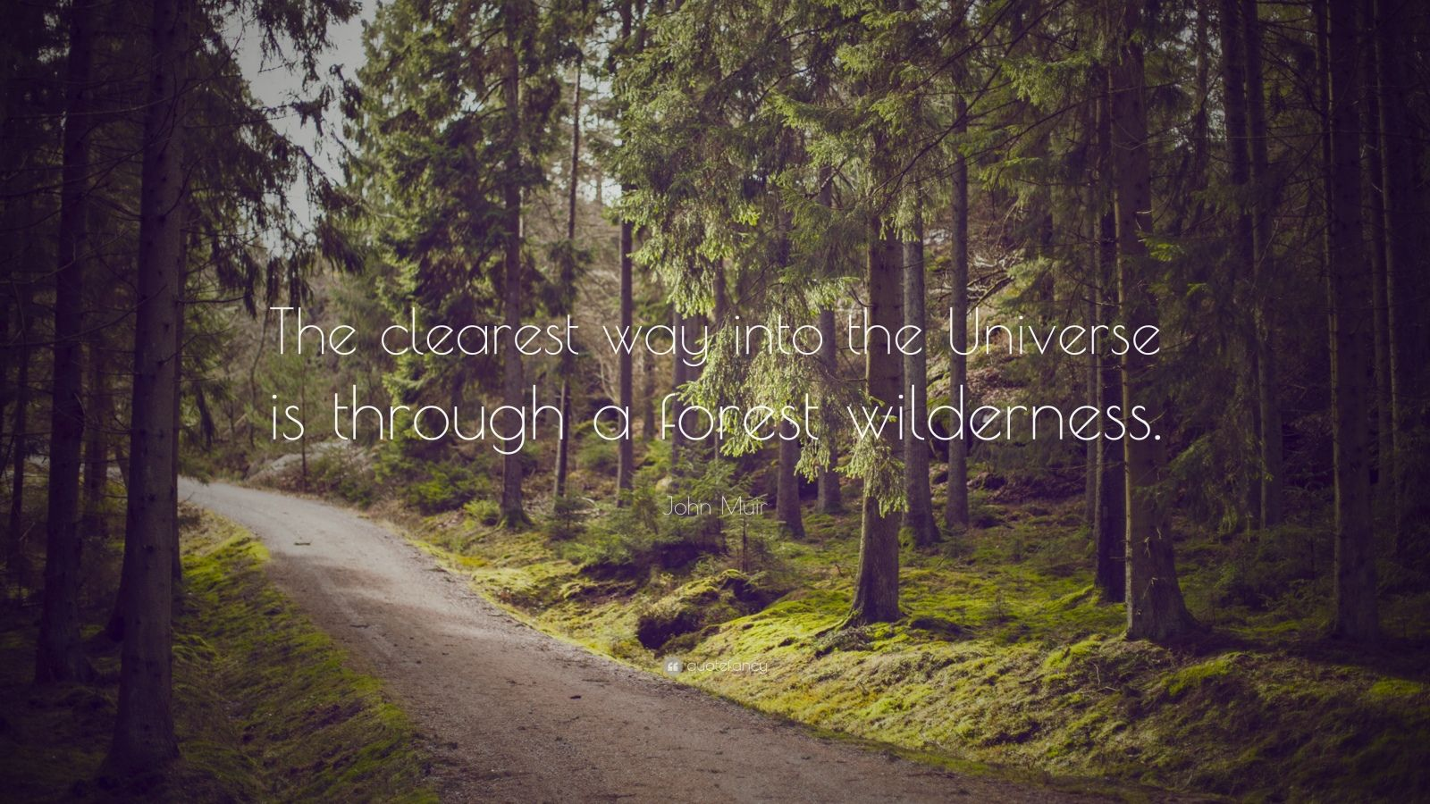 """John Muir Quote: """"The clearest way into the Universe is through a forest wilderness."""""""