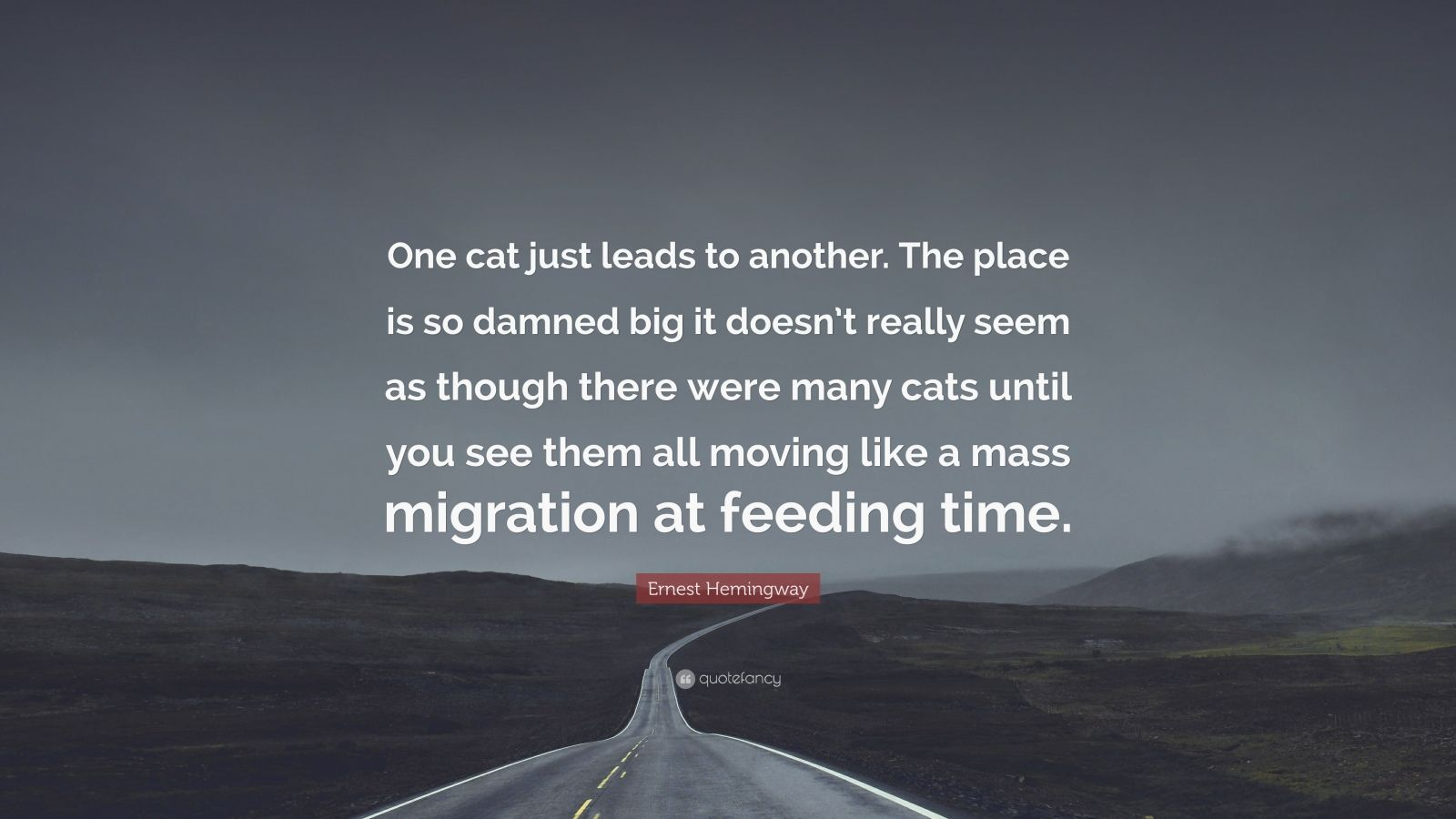 """Ernest Hemingway Quote: """"One cat just leads to another. The place is so damned big it doesn't really seem as though there were many cats until you see them all moving like a mass migration at feeding time."""""""