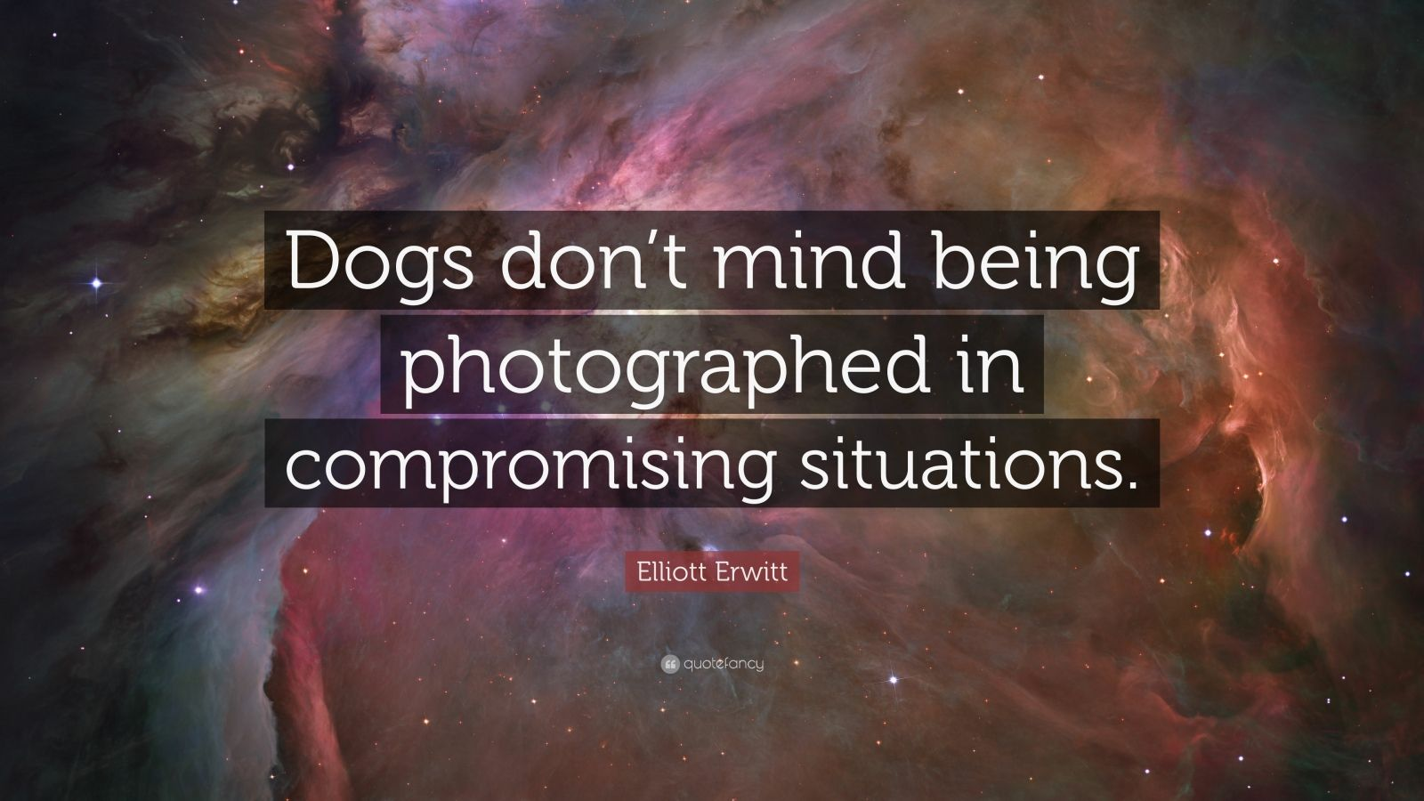 """Elliott Erwitt Quote: """"Dogs don't mind being photographed in compromising situations."""""""