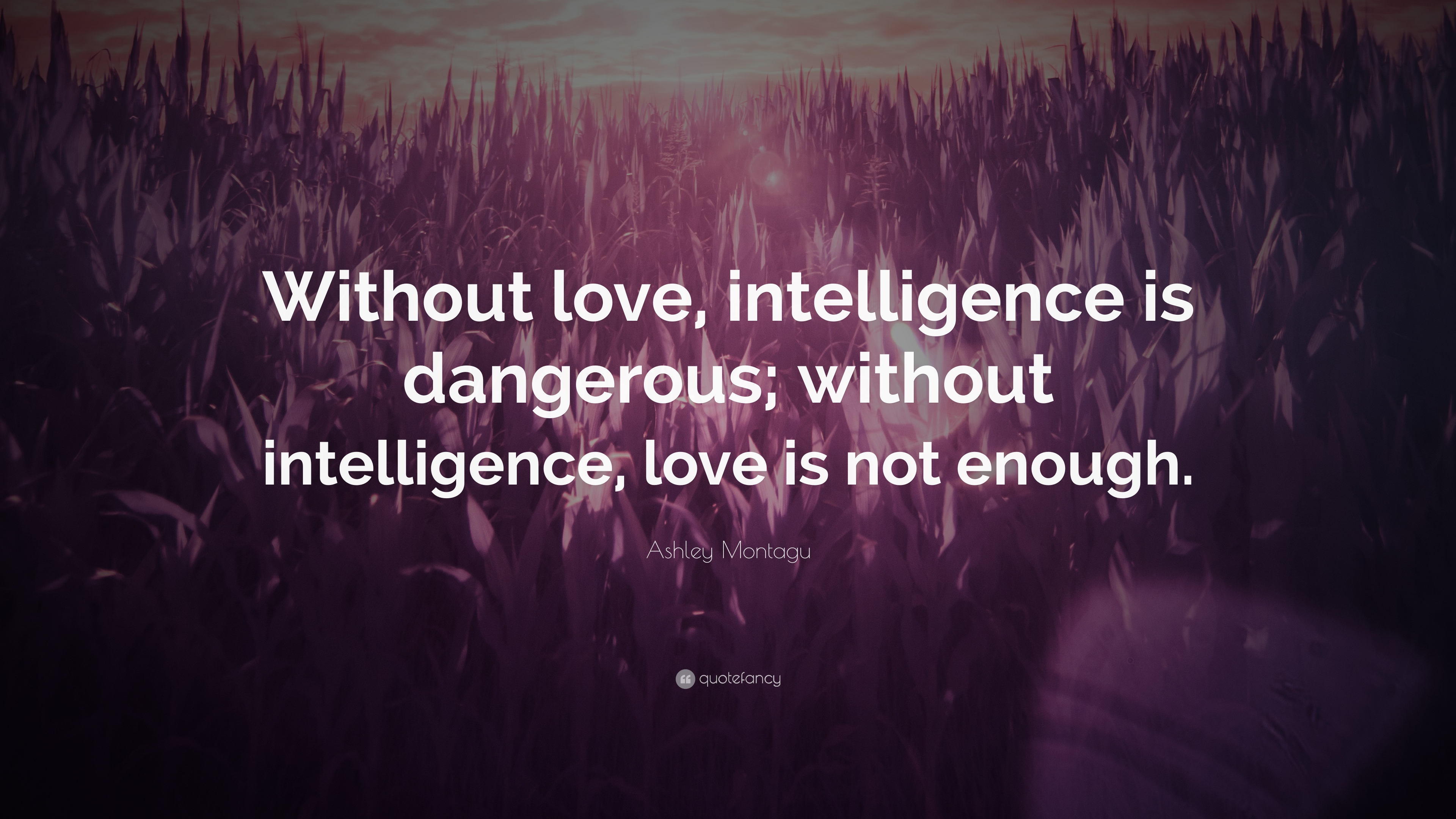 ashley montagu quote without love intelligence is. Black Bedroom Furniture Sets. Home Design Ideas