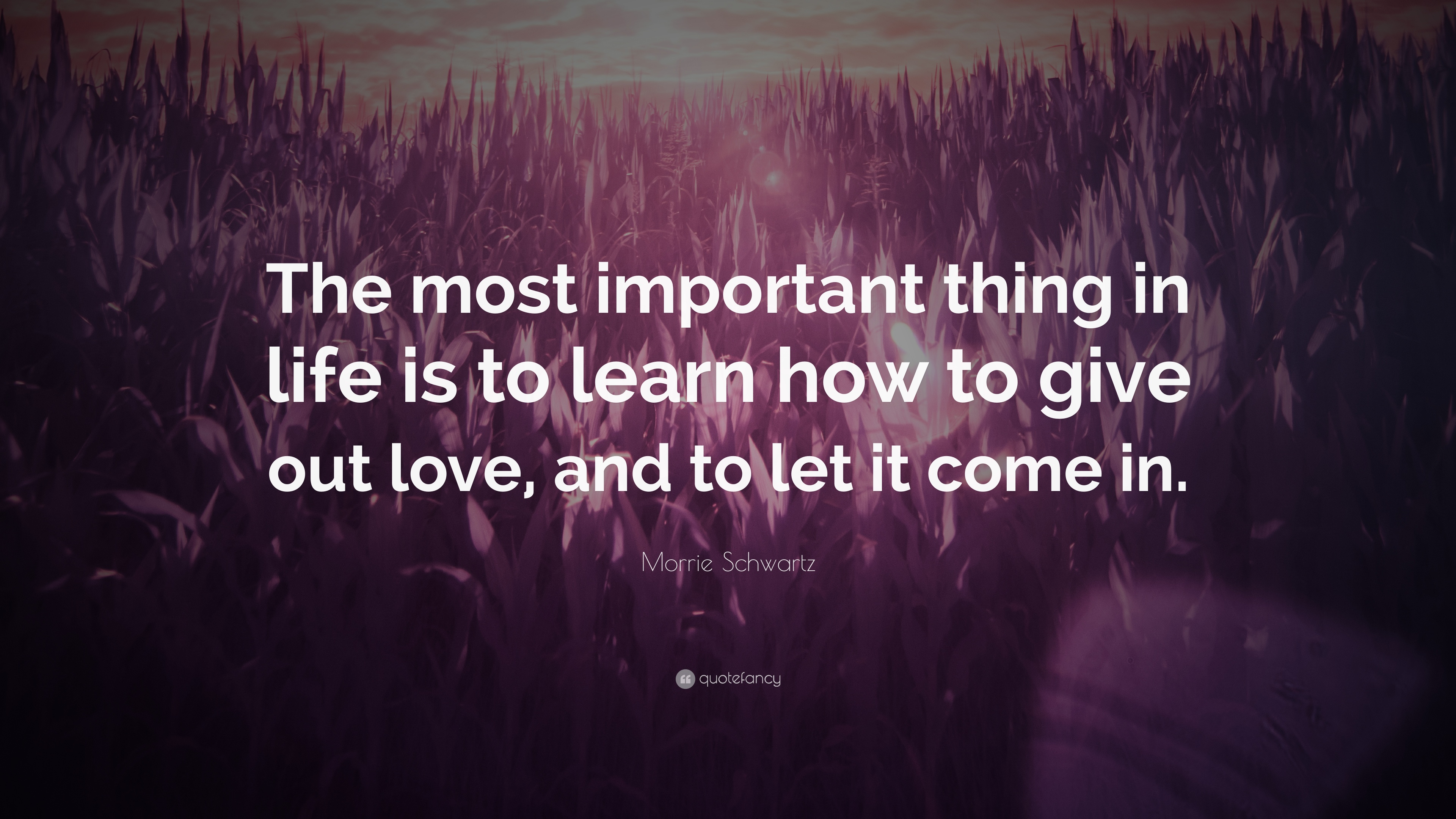 Morrie Schwartz Quote: The most important thing in life