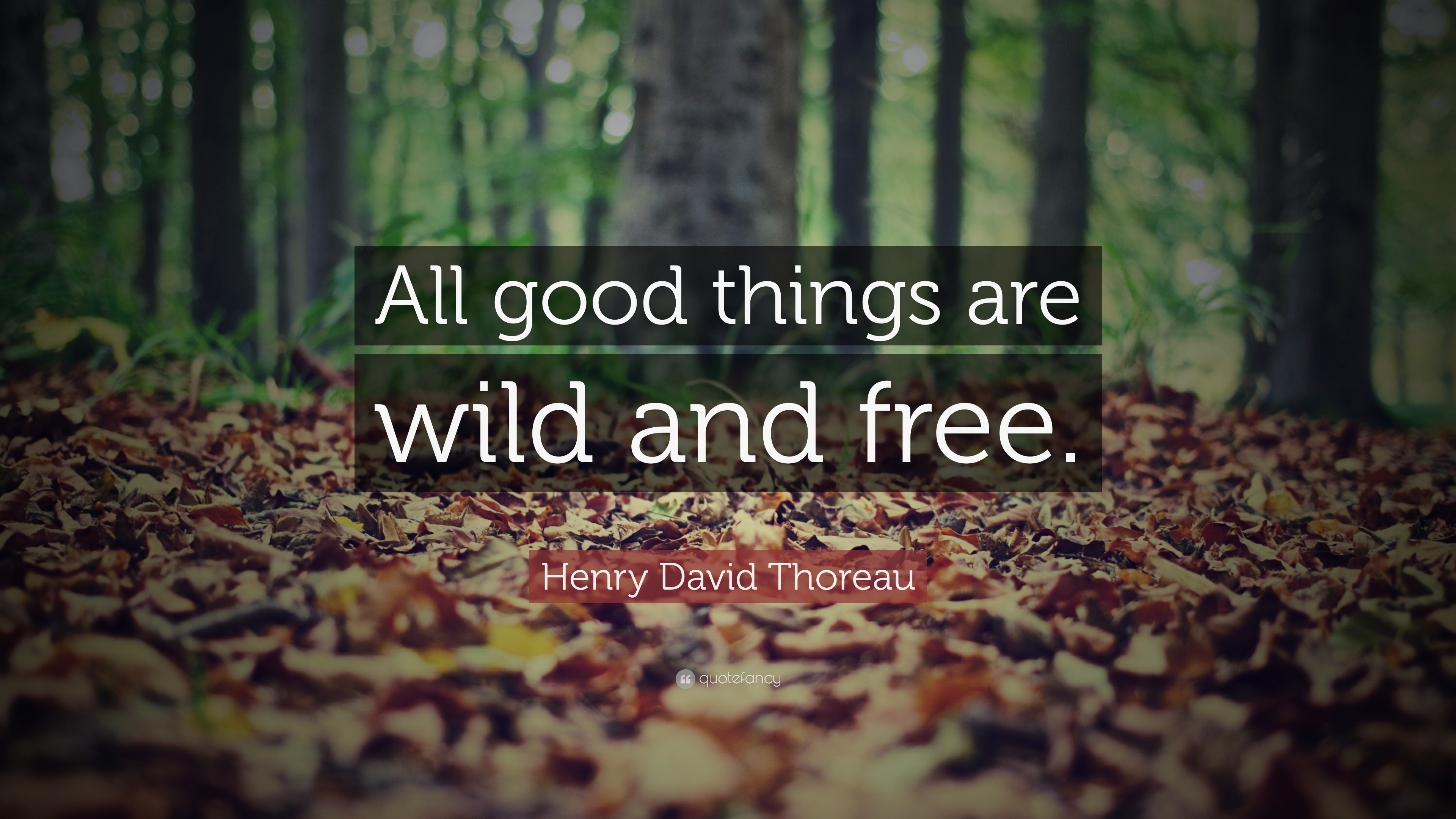 Image result for HD Thoreau quotes