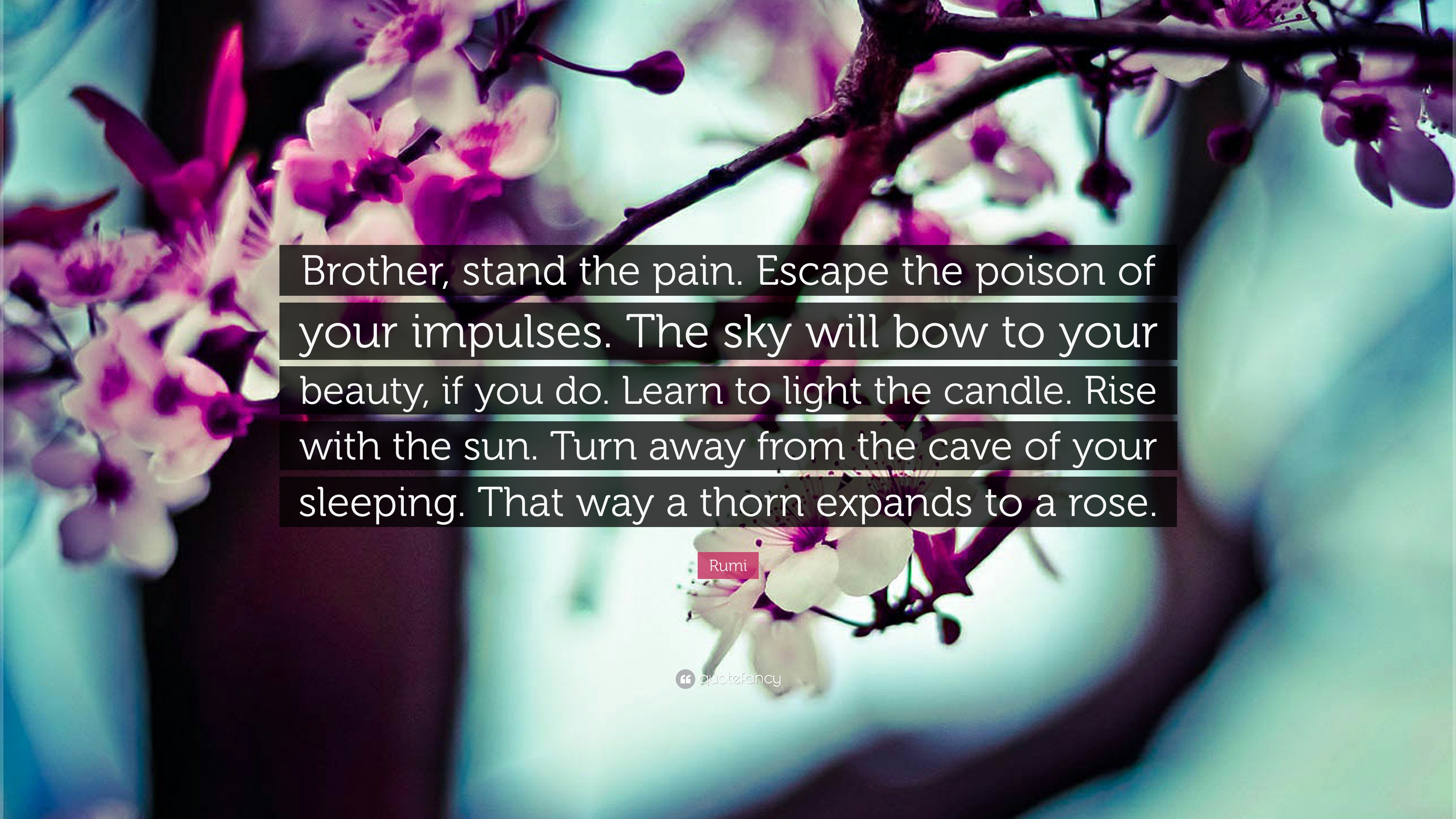 Rumi Quote Brother Stand The Pain Escape The Poison Of Your