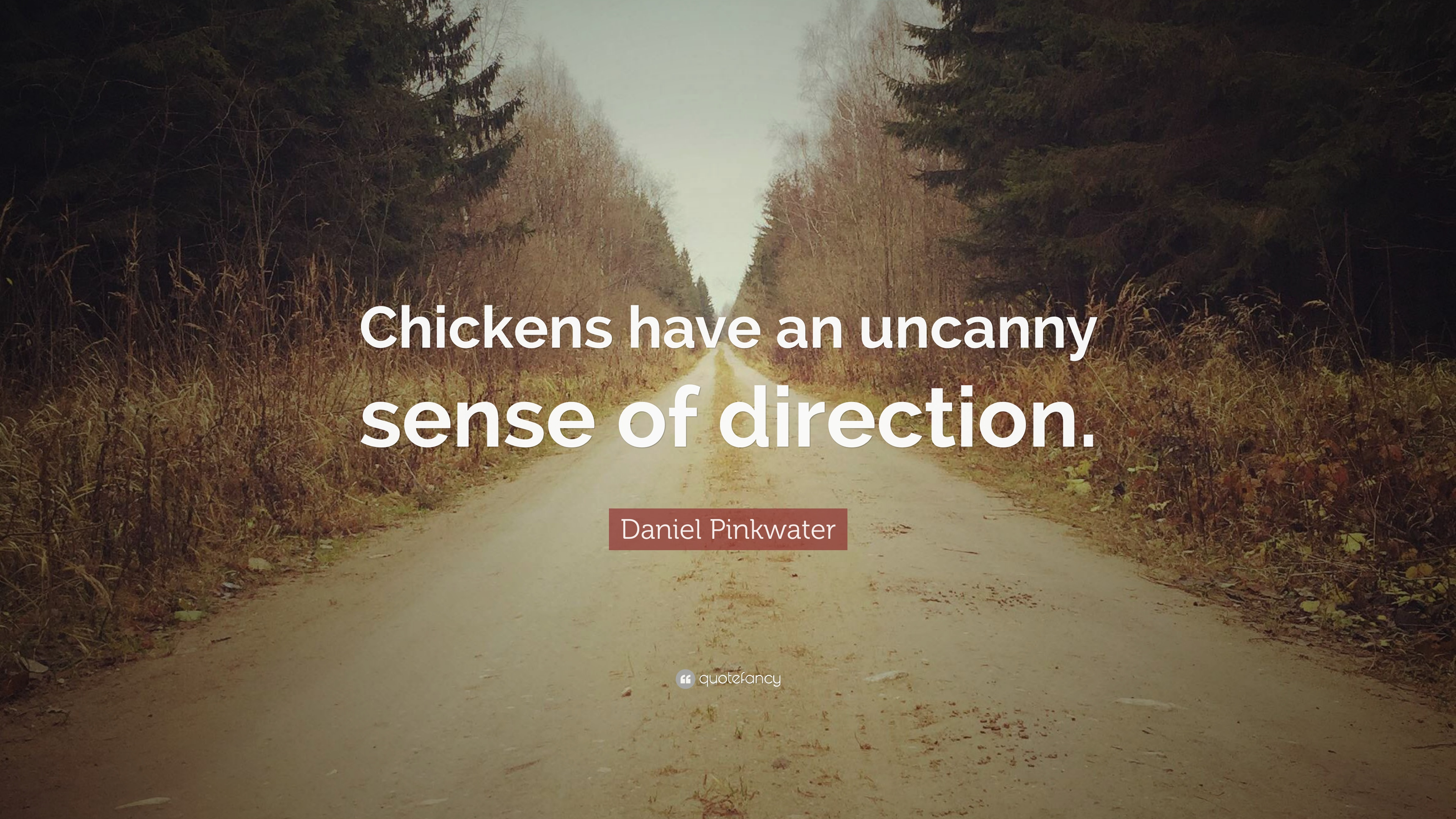 Daniel Pinkwater Quotes (22 Wallpapers)