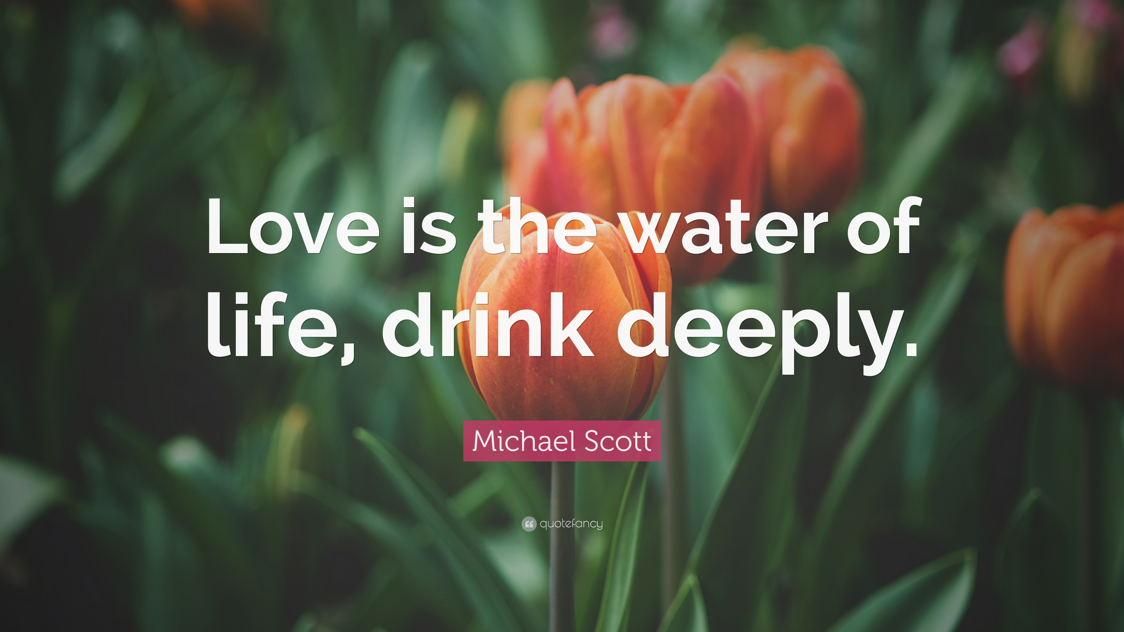 "Water Is Life Quote Cool Michael Scott Quote ""Love Is The Water Of Life Drink Deeply"