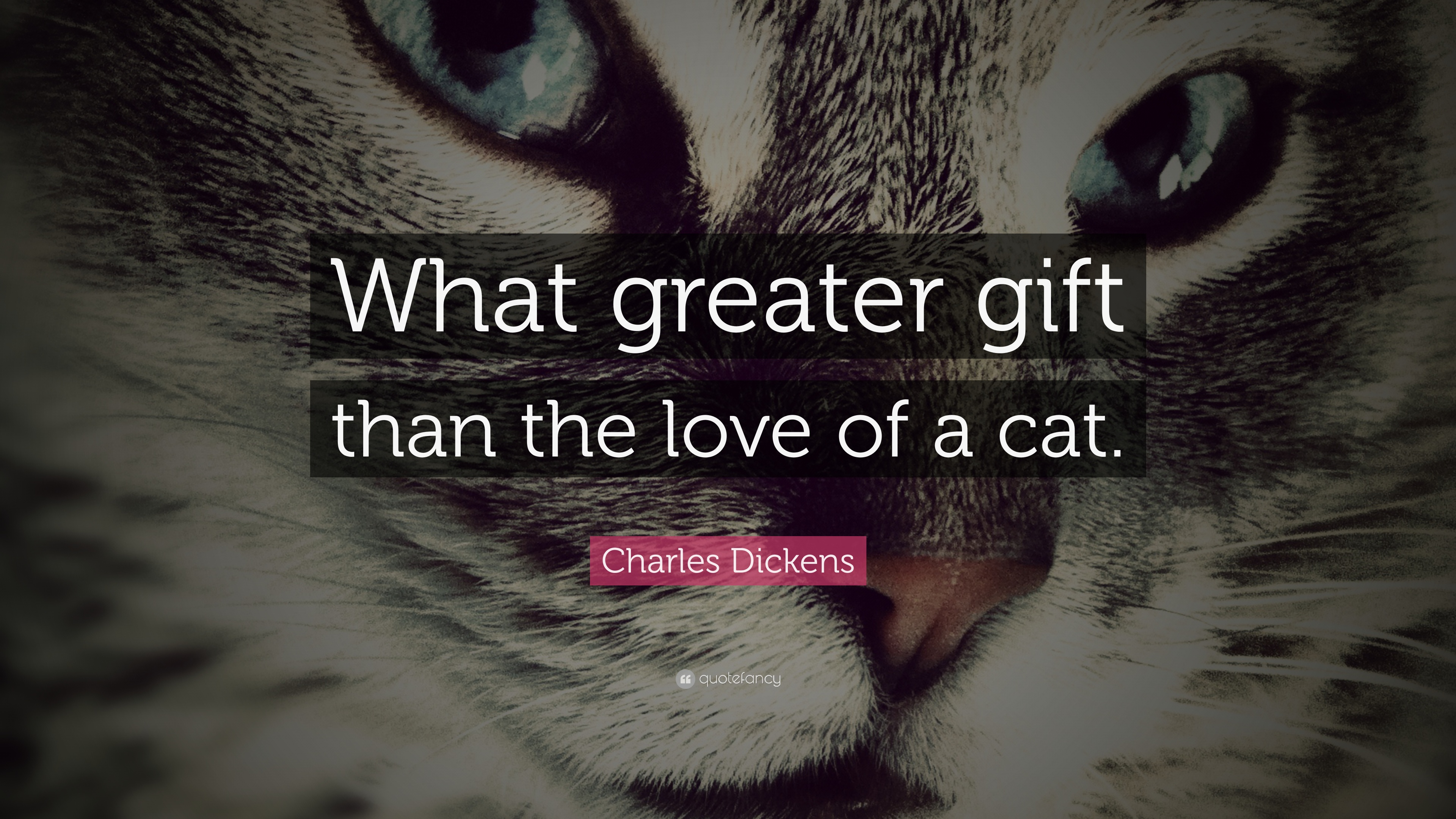 """Charles Dickens Quote """"What greater t than the love of a cat """""""