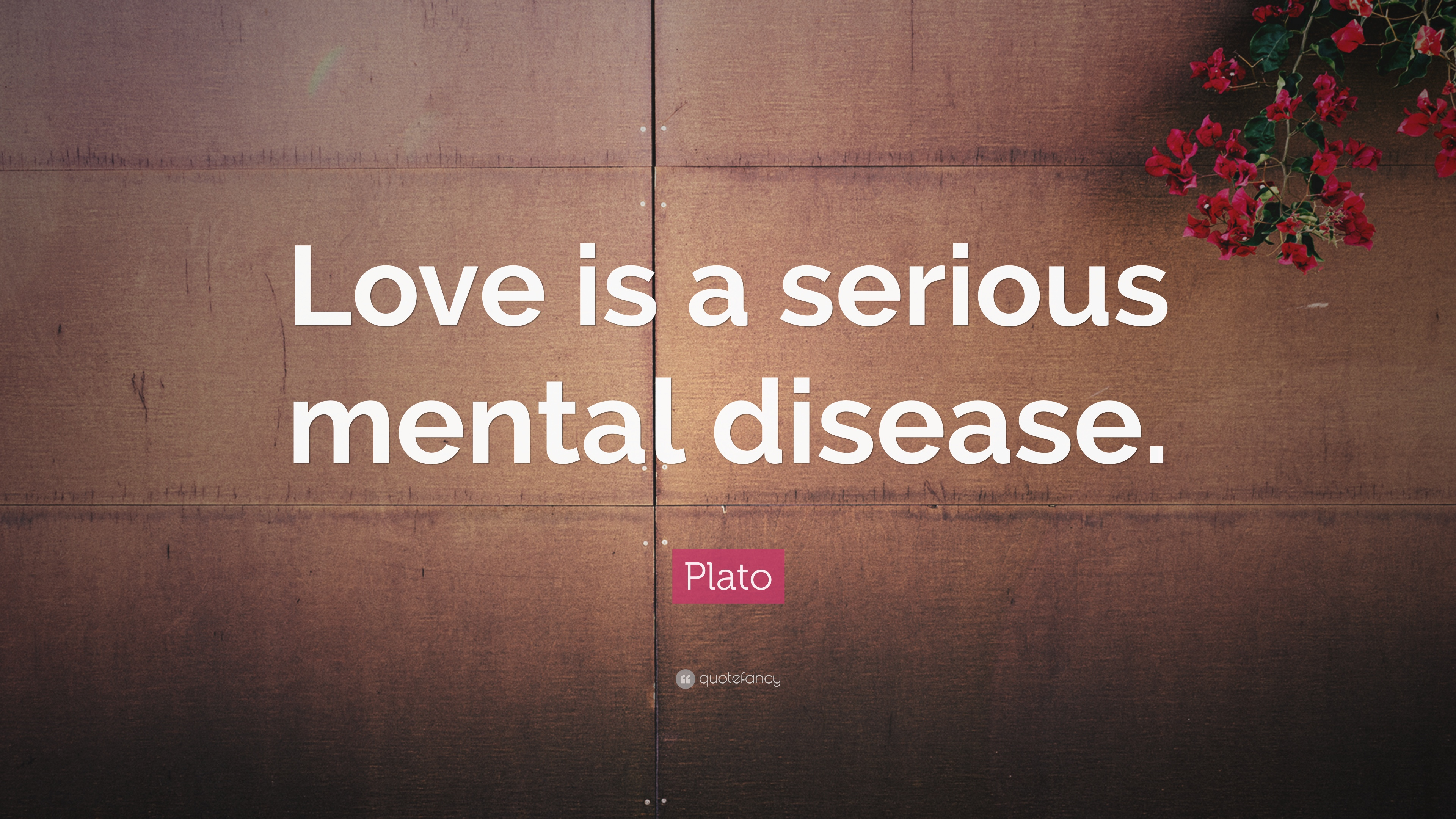 plato quote love is a serious mental disease 13