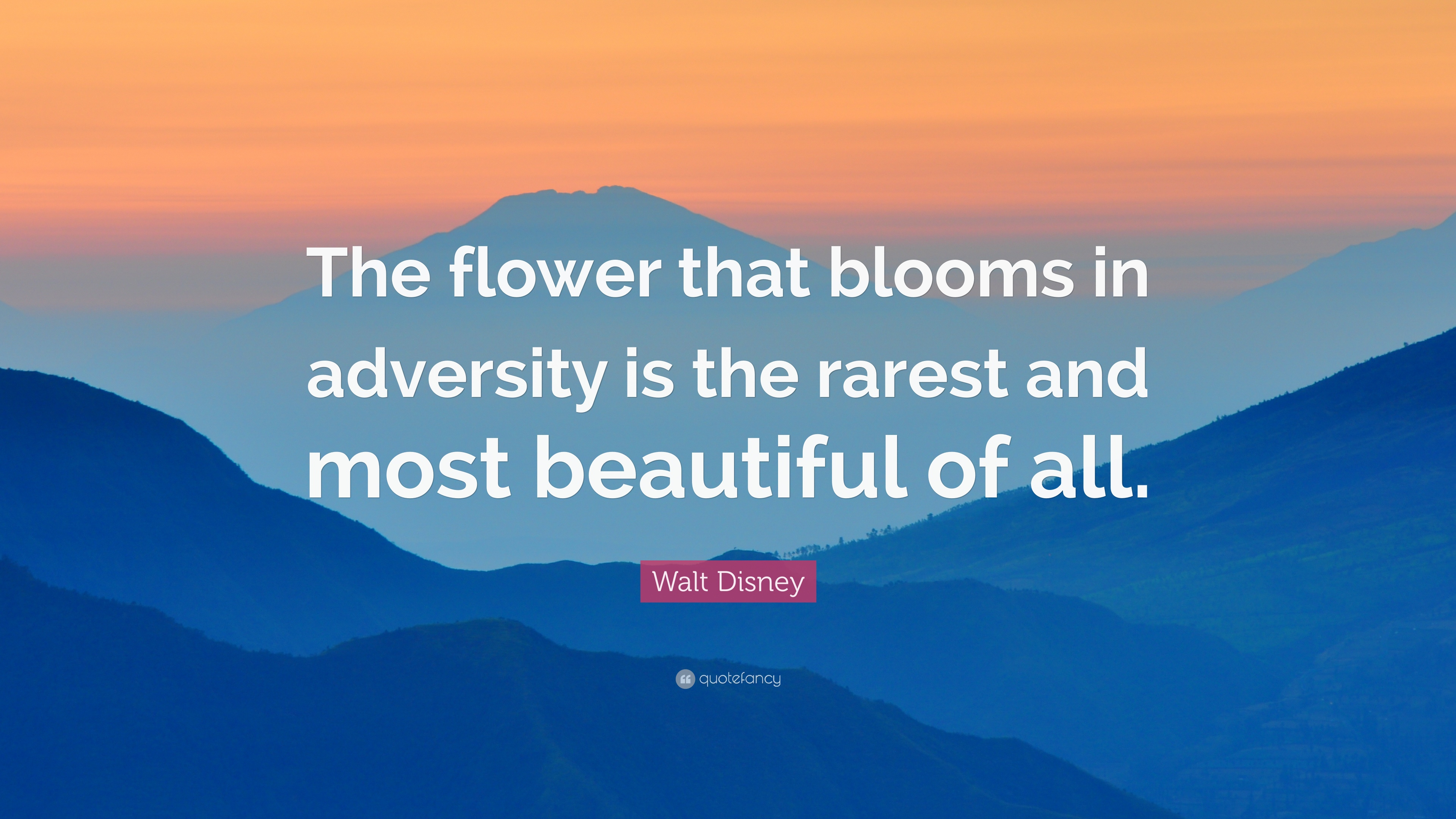 "Walt Disney Quote ""The flower that blooms in adversity is the rarest and mos"