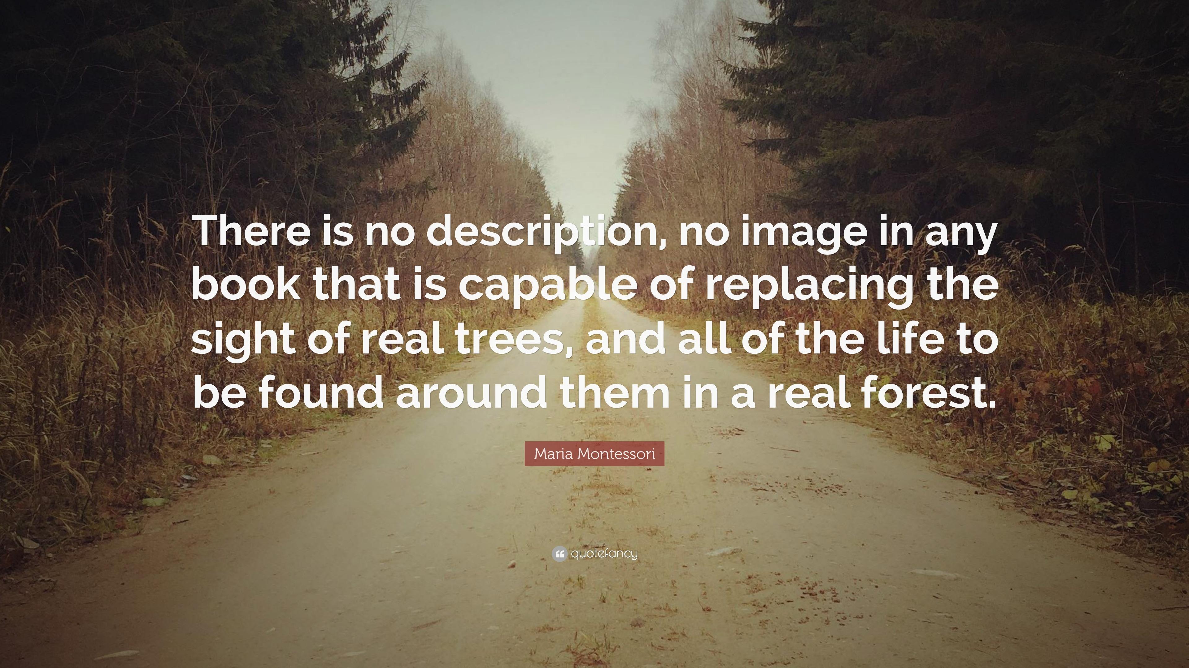 Maria Montessori Quote There Is No Description No Image In Any