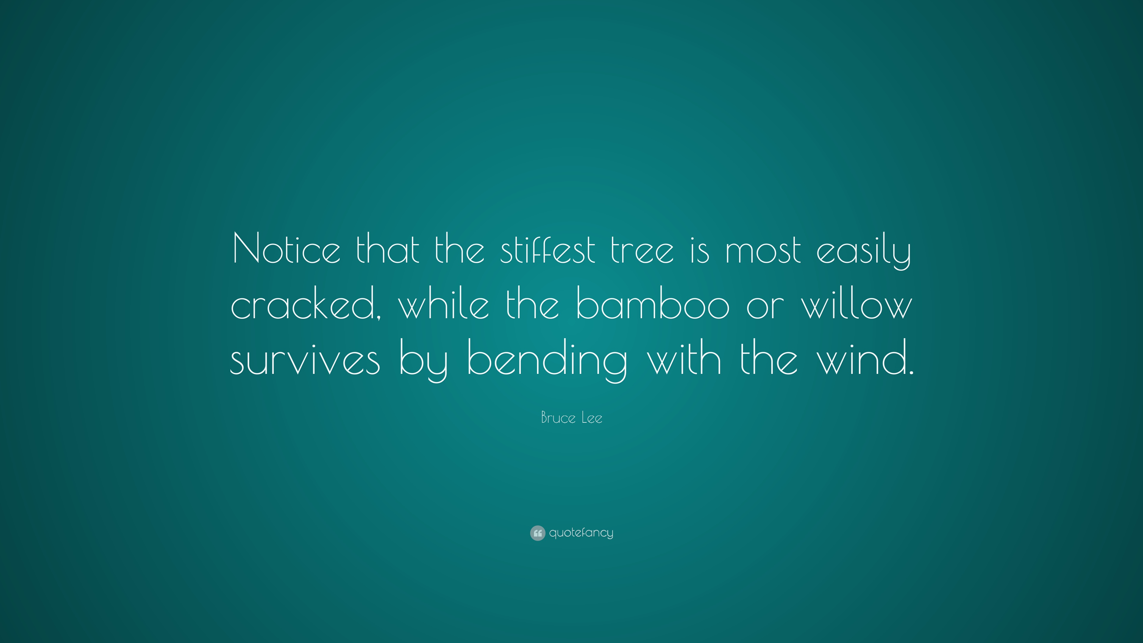 Bruce Lee Quote Notice That The Stiffest Tree Is Most Easily