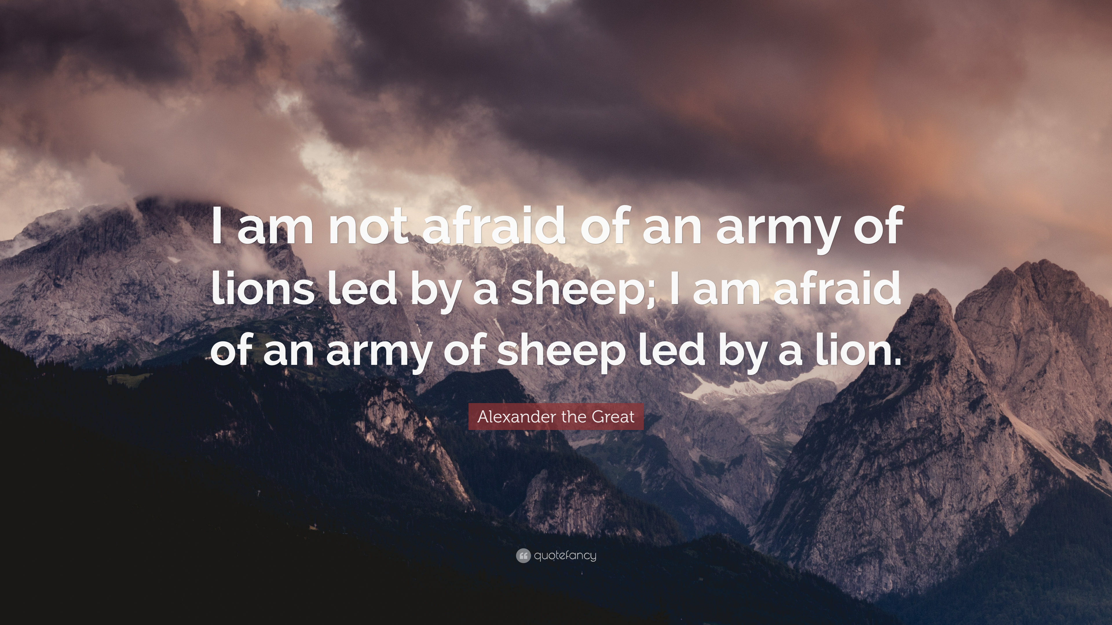 Quotes About Lion And Sheep Best Image And Description About Lion