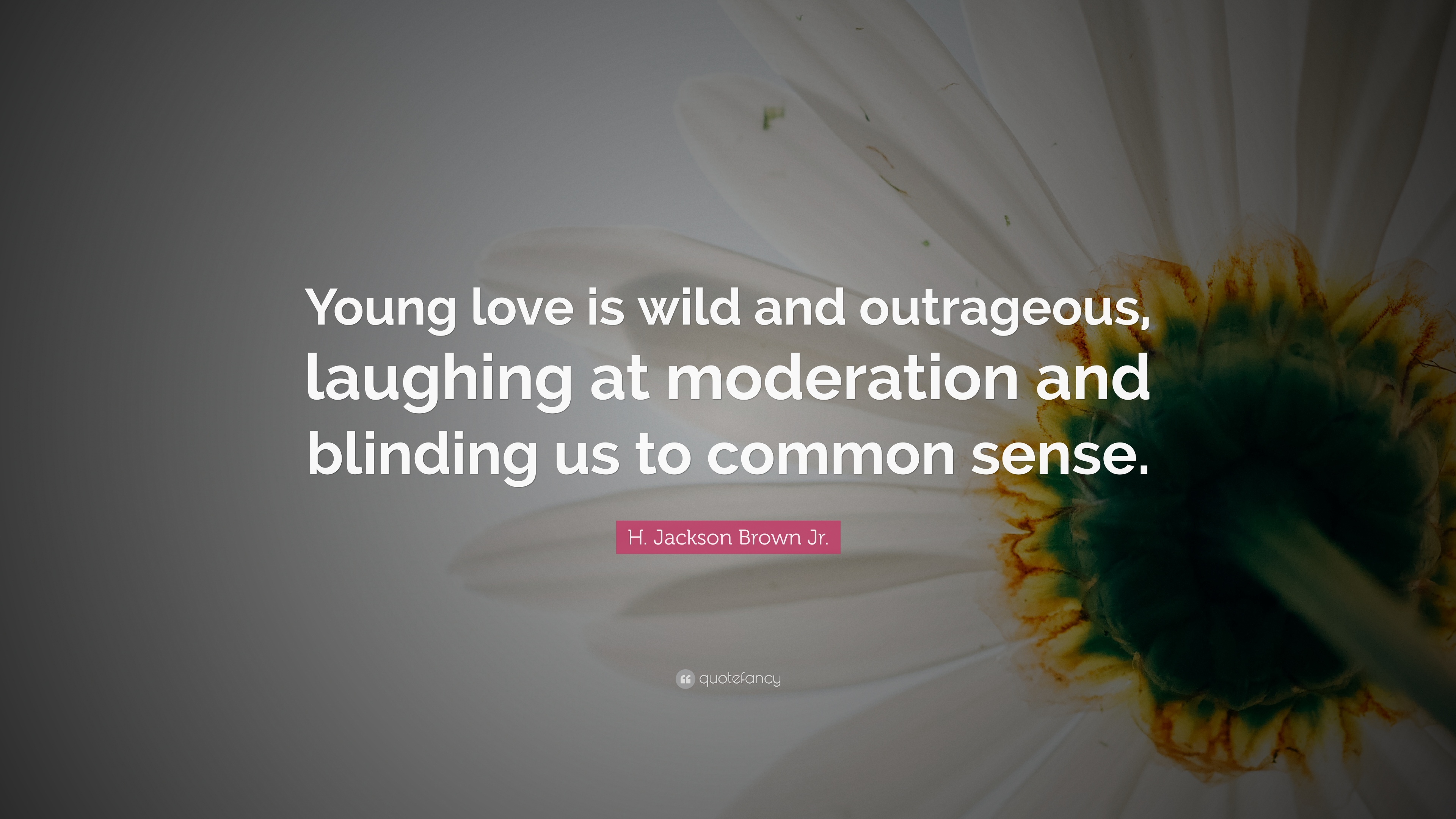 "H. Jackson Brown Jr. Quote: ""Young love is wild and ..."