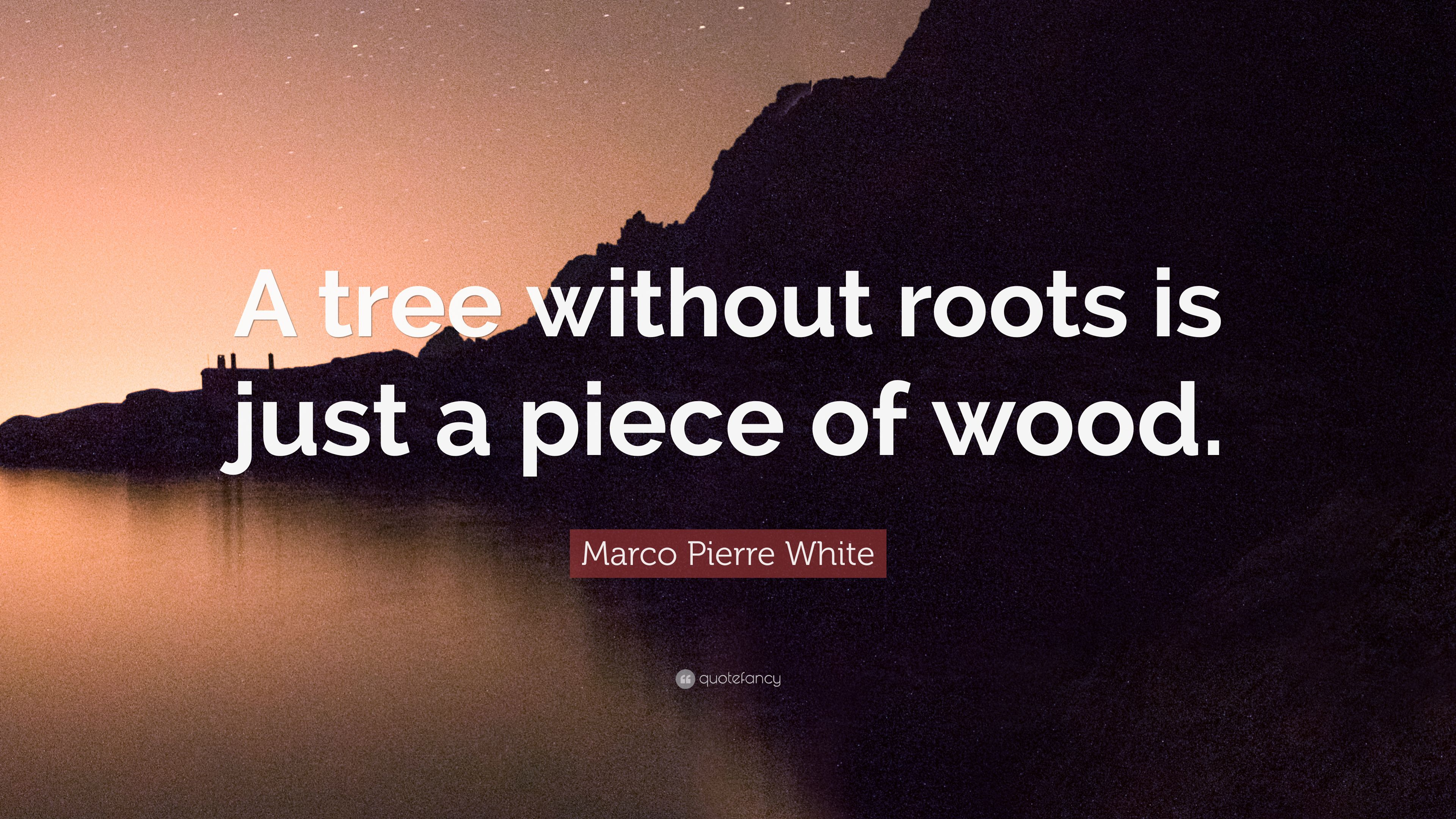 Marco Pierre White Quote A Tree Without Roots Is Just A