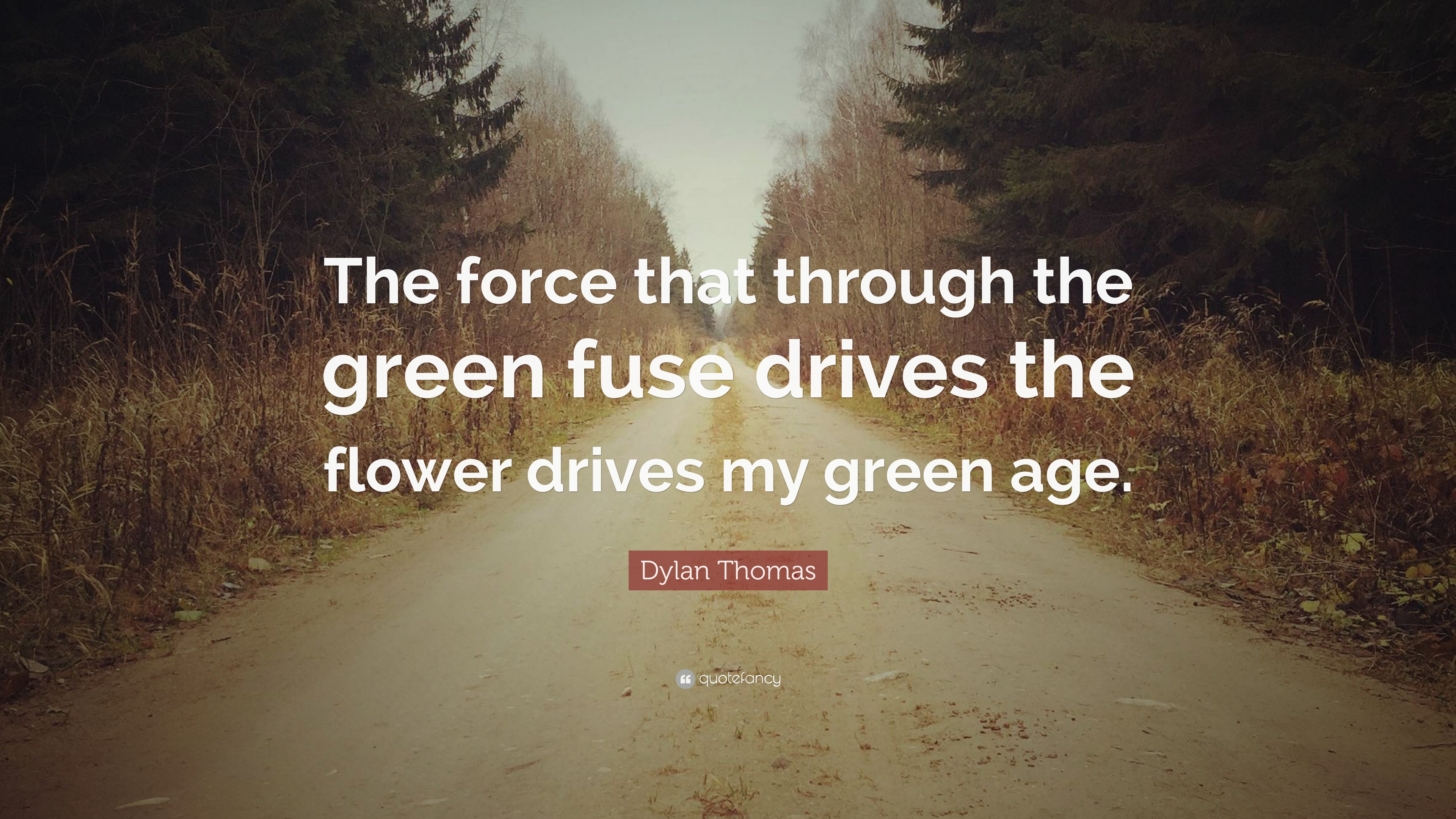 the force in dylans the force The force is with you: dylan thomas's force as it exists in his poetry and drama _____ a thesis presented to the faculty of the department of english.