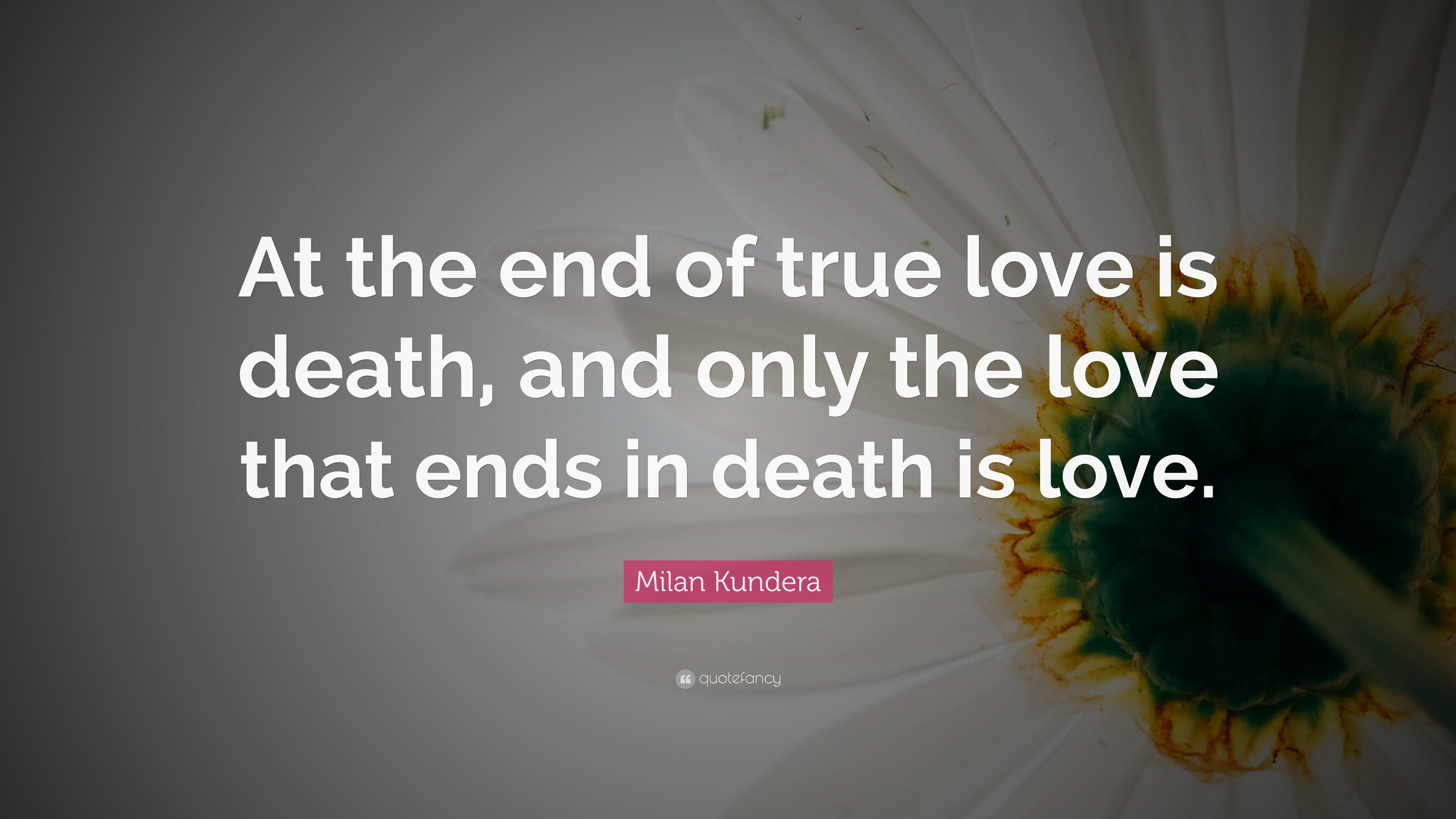 True Love Quotes Wallpaper: Milan Kundera Quotes (100 Wallpapers)