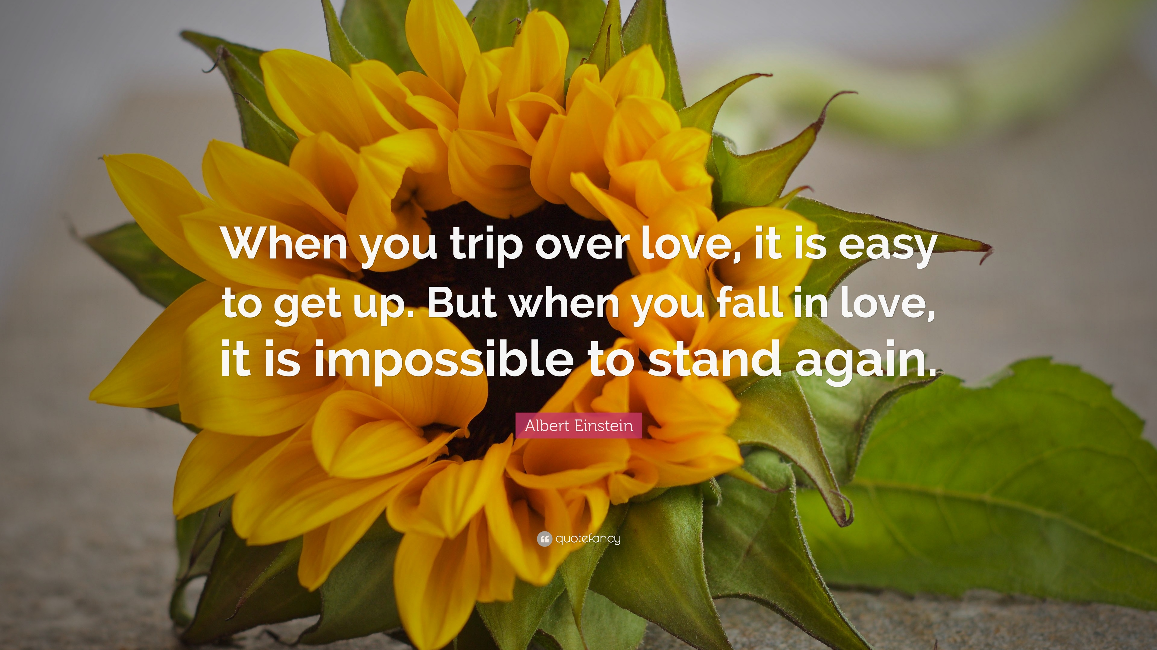 "Love Flower Quotes Albert Einstein Quote ""When You Trip Over Love It Is Easy To Get"