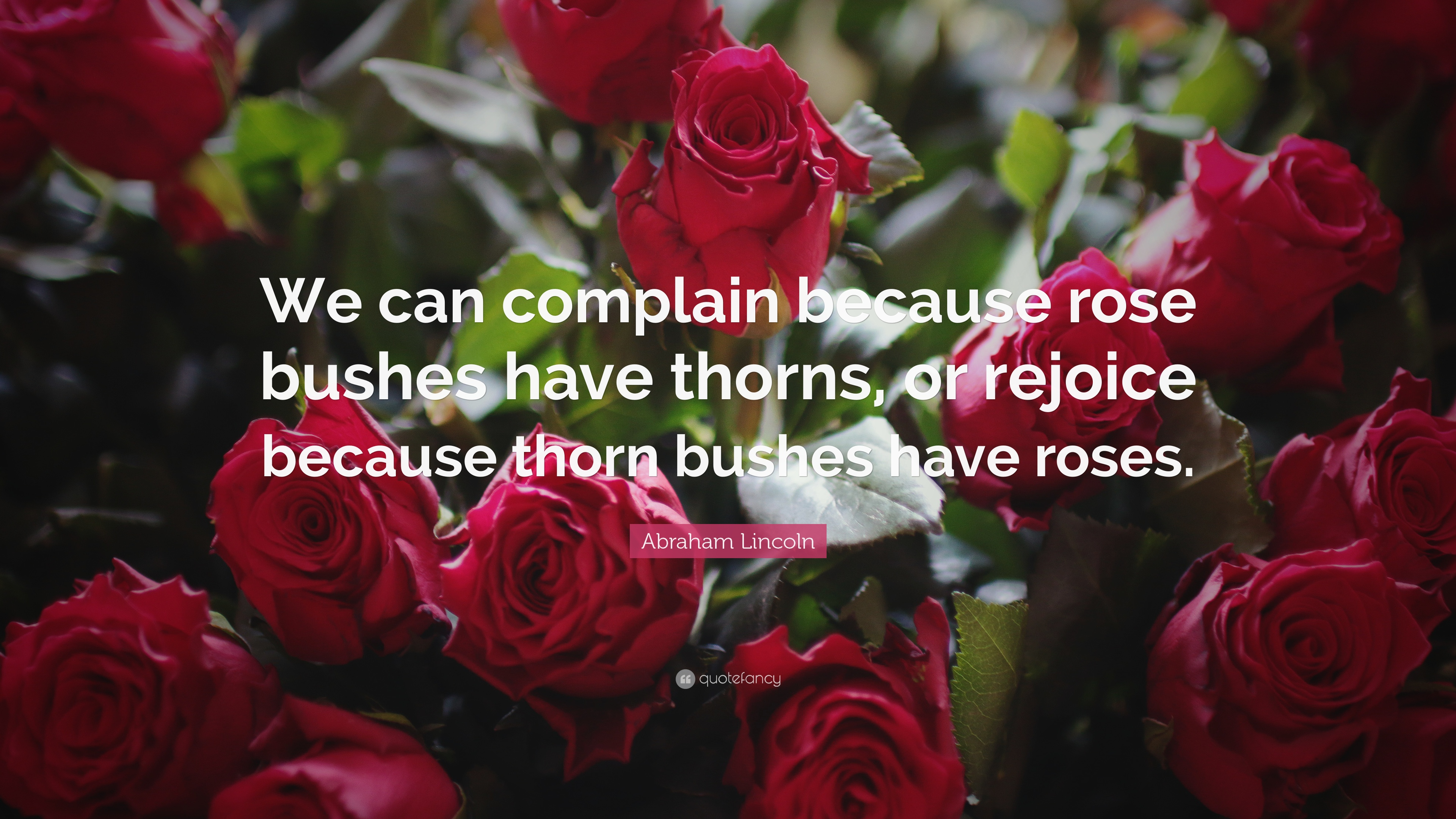 """abraham lincoln quote """"we can complain because rose bushes have"""