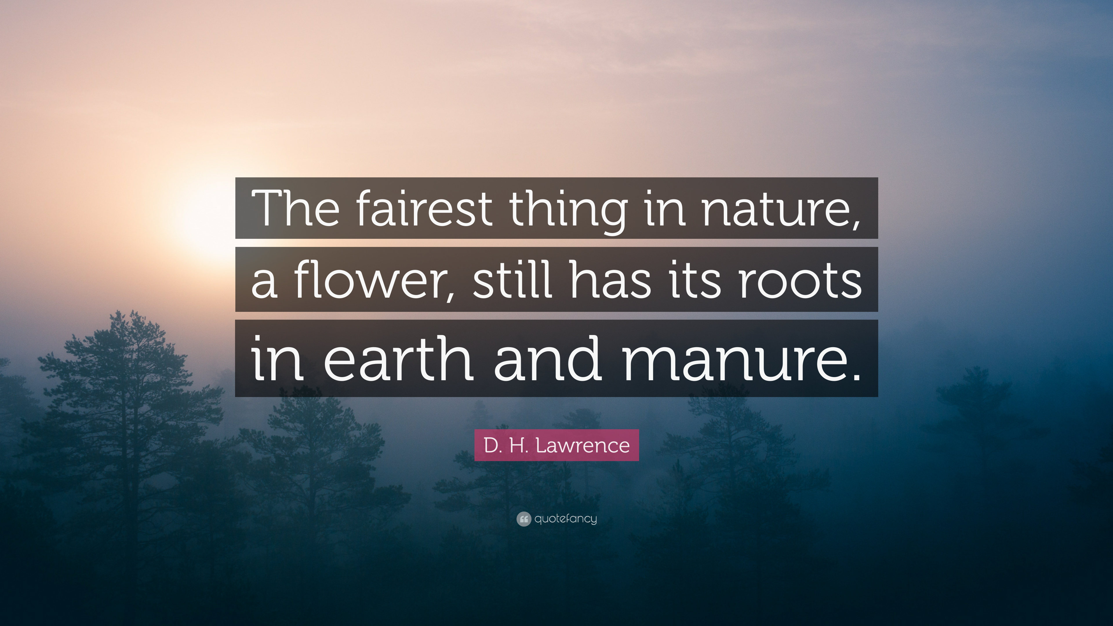 "038166dcefe D. H. Lawrence Quote: ""The fairest thing in nature, a flower, still has"