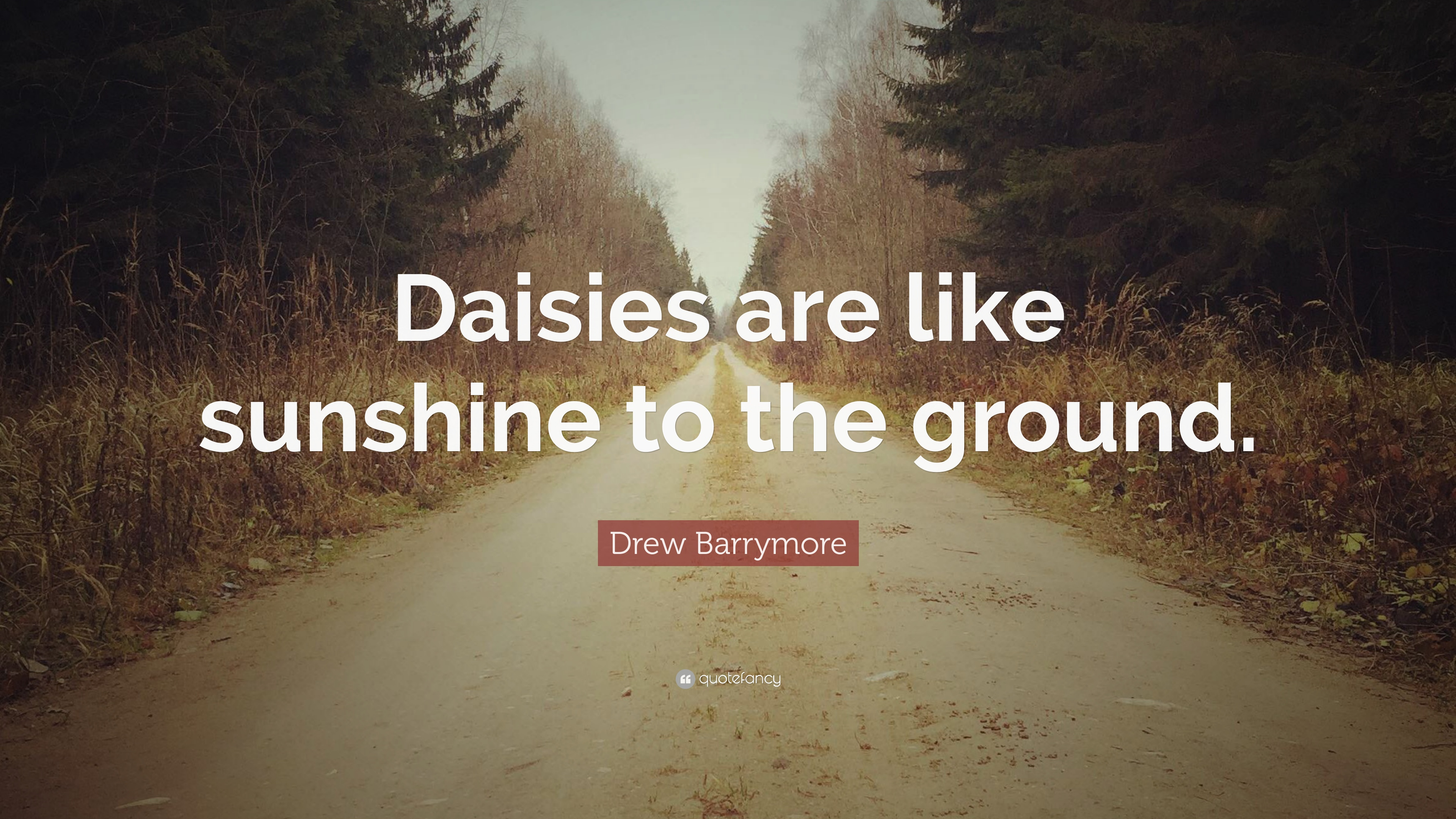 """Drew Barrymore Quote: """"Daisies are like sunshine to the ..."""