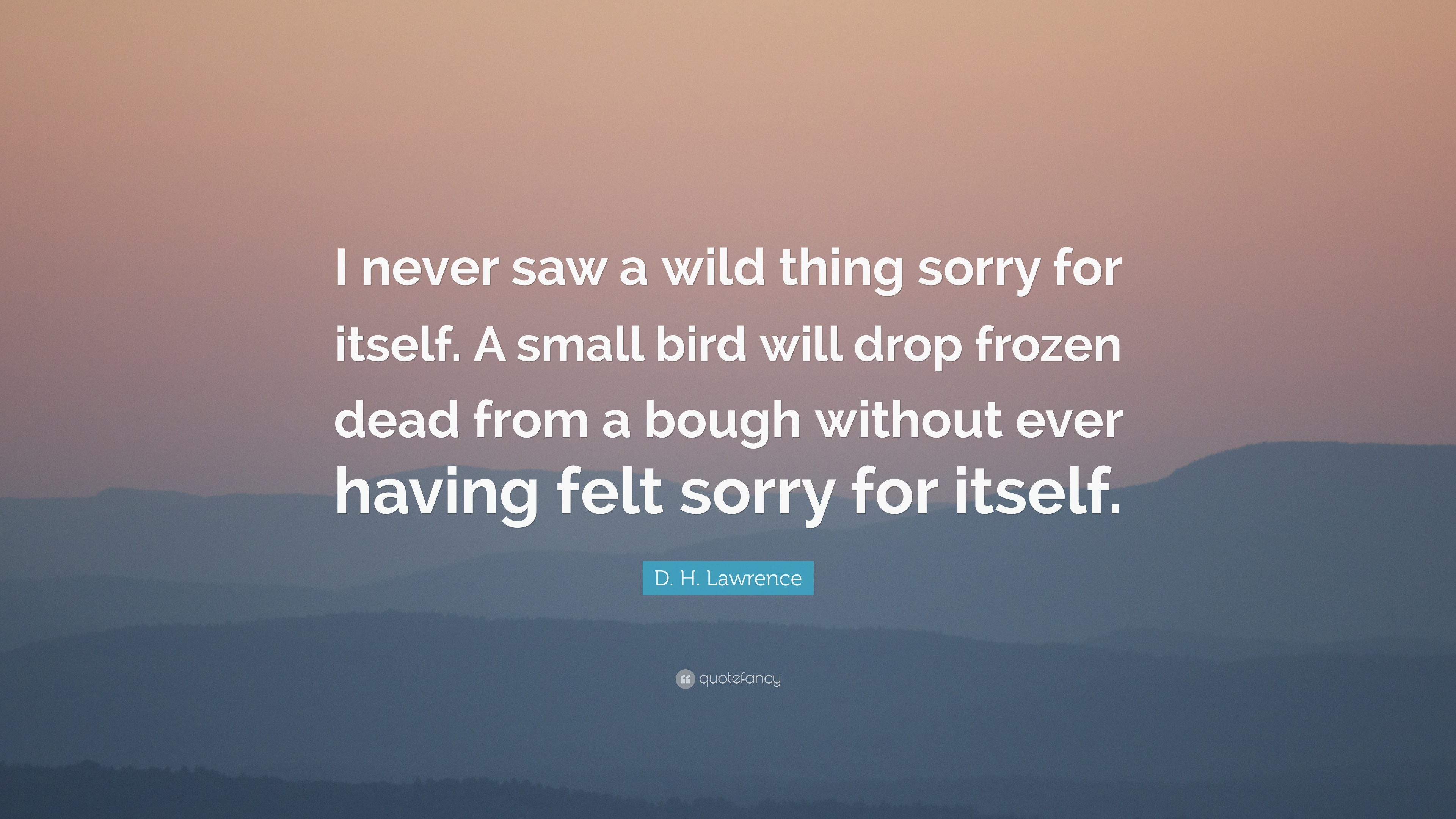 dh lawrence wild thing