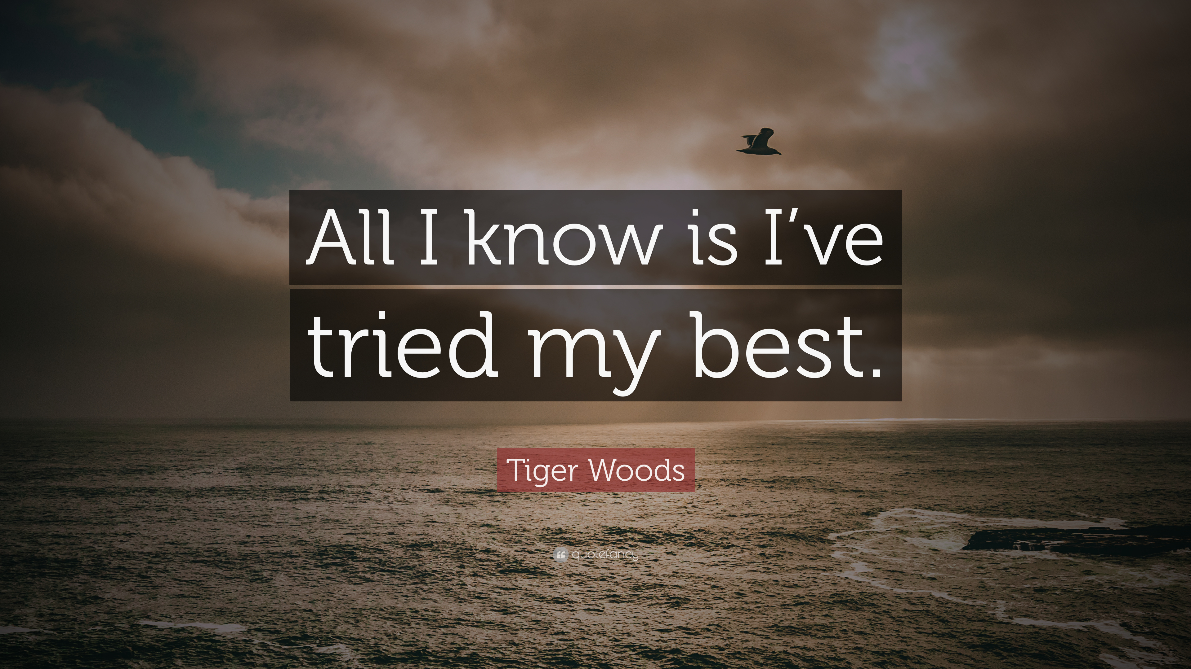 Tiger Woods Quote All I Know Is Ive Tried My Best 7 Wallpapers