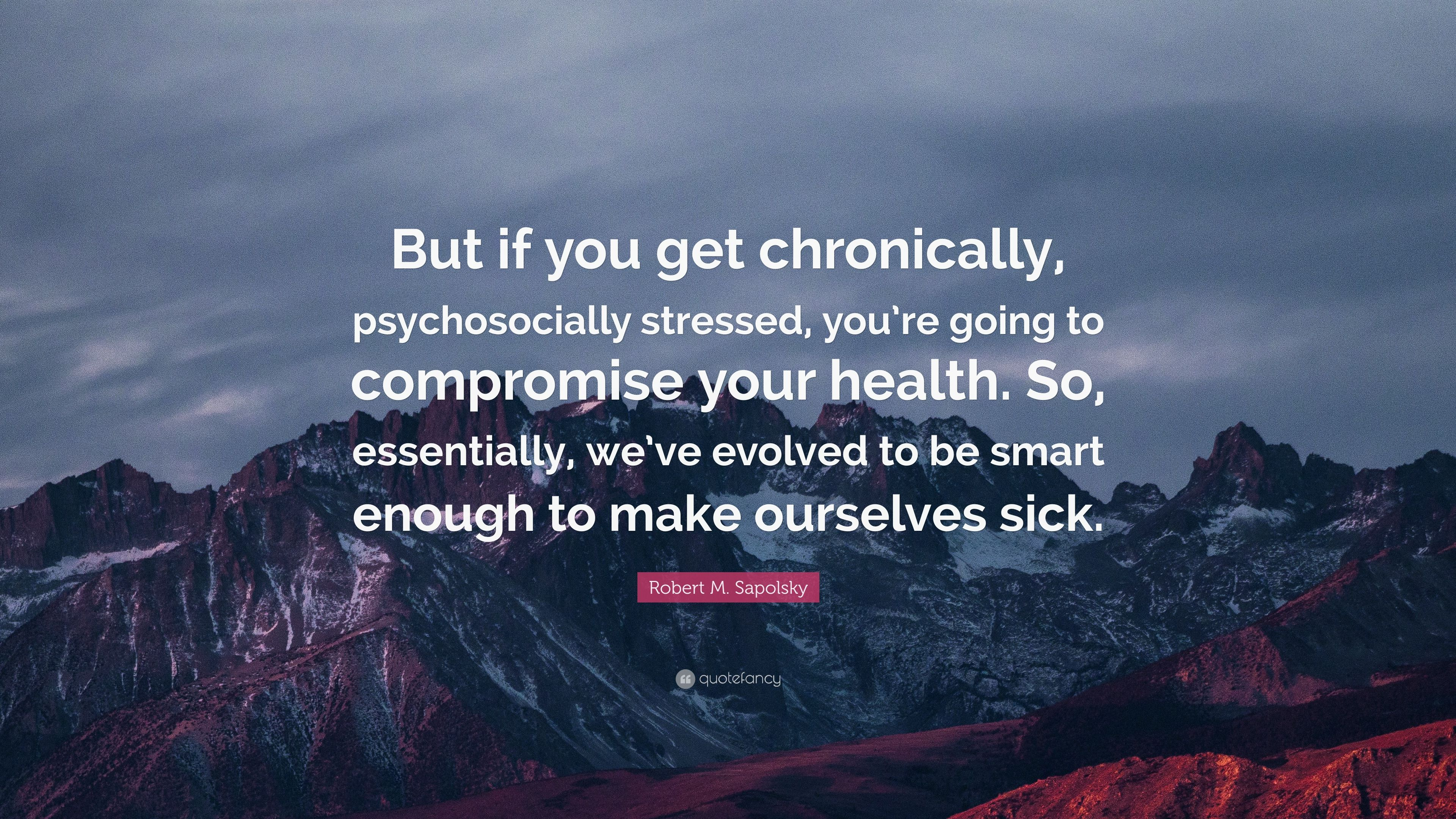 Robert M. Sapolsky Quote: U201cBut If You Get Chronically, Psychosocially  Stressed,