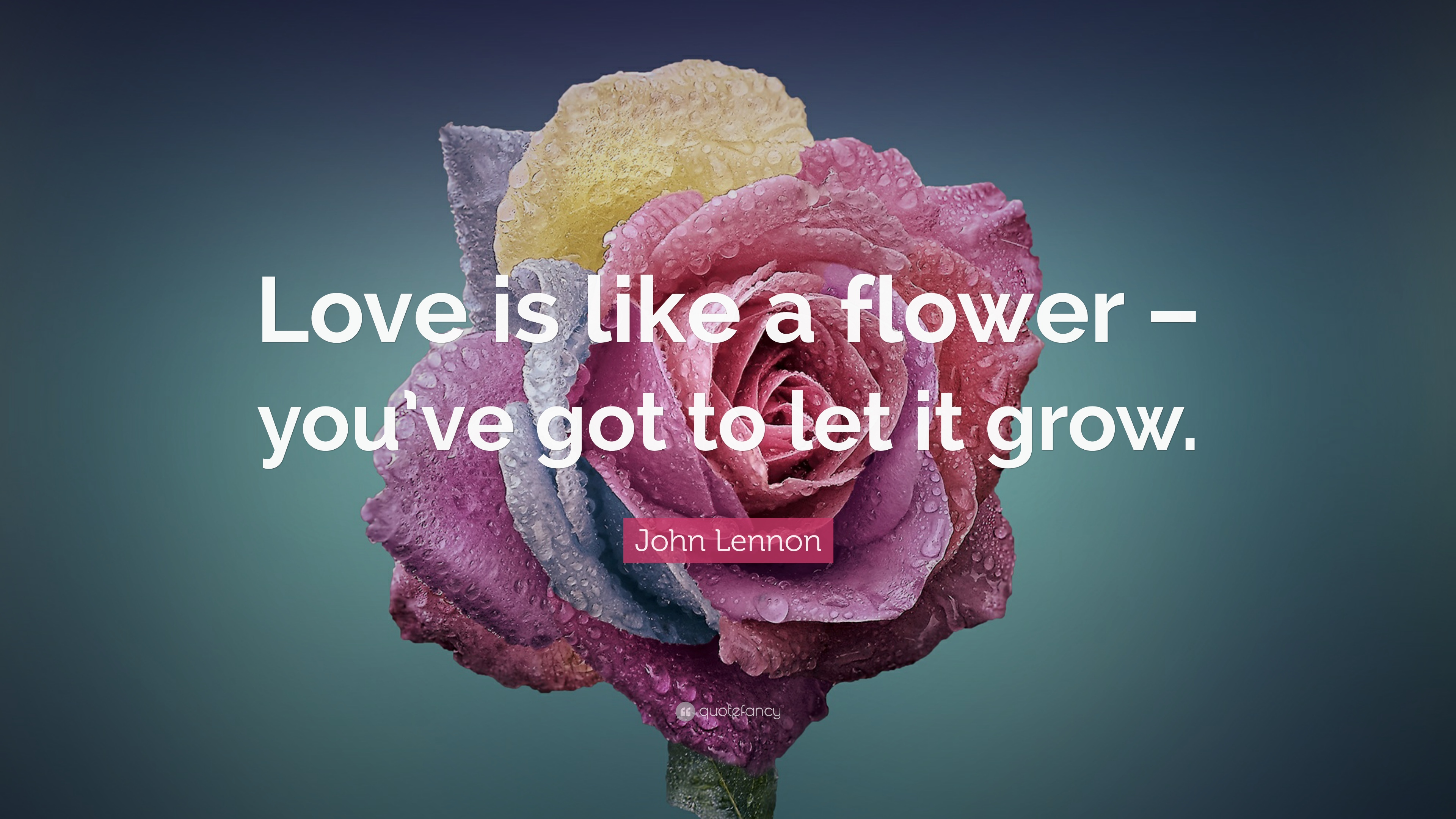 "John Lennon Quote ""Love is like a flower – you ve got to"