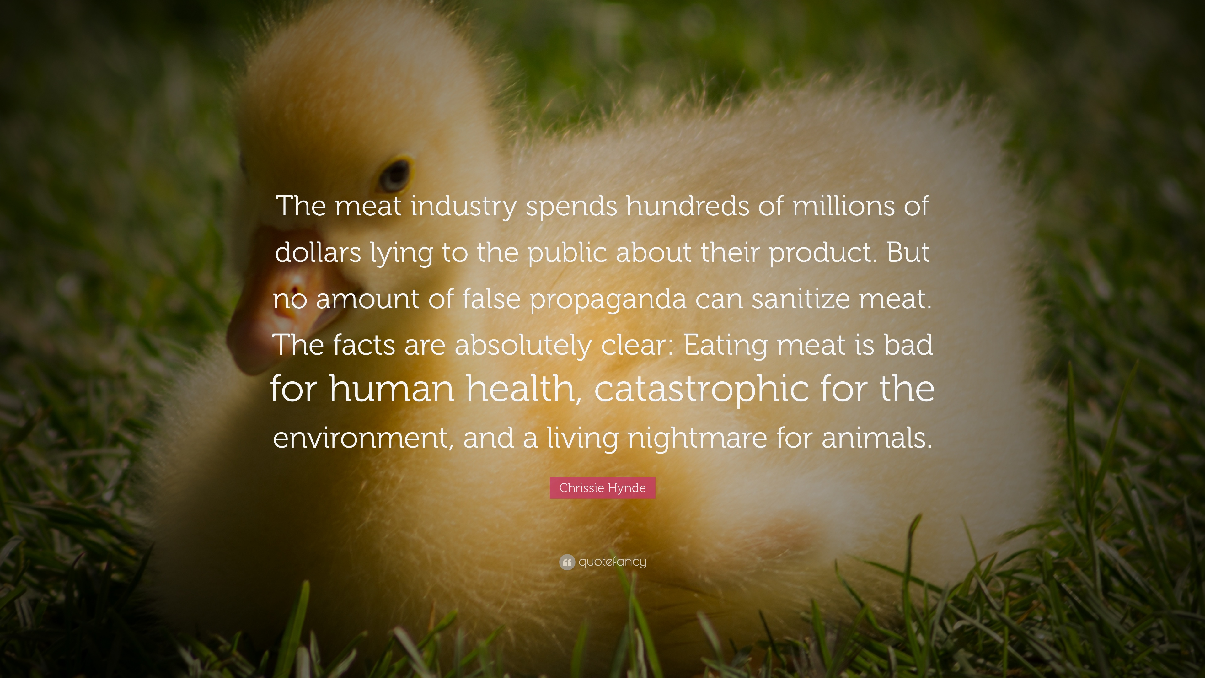 """Meat Quotes: Chrissie Hynde Quote: """"The Meat Industry Spends Hundreds"""