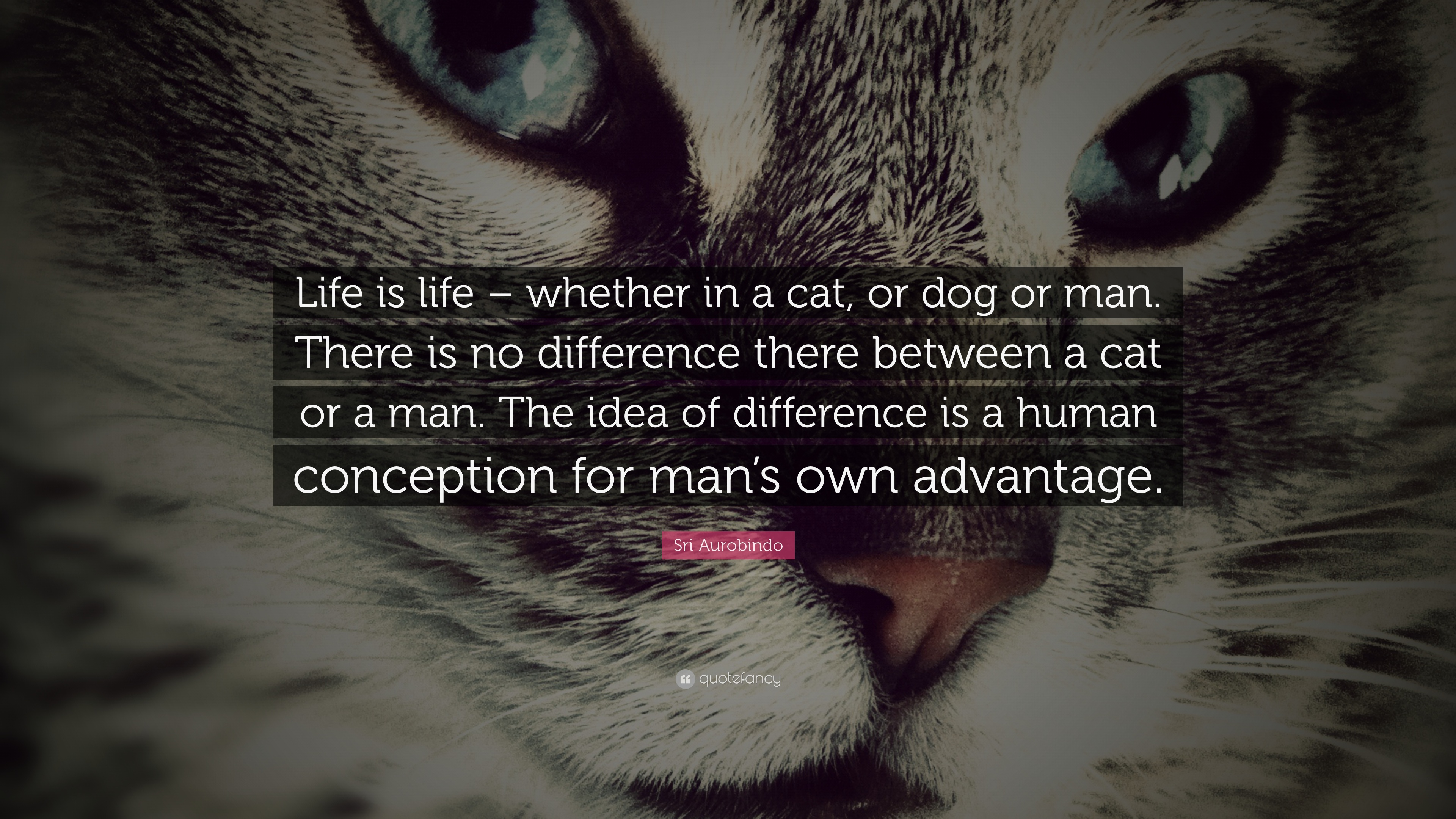 Sri Aurobindo Quote Life Is Life Whether In A Cat Or Dog Or Man