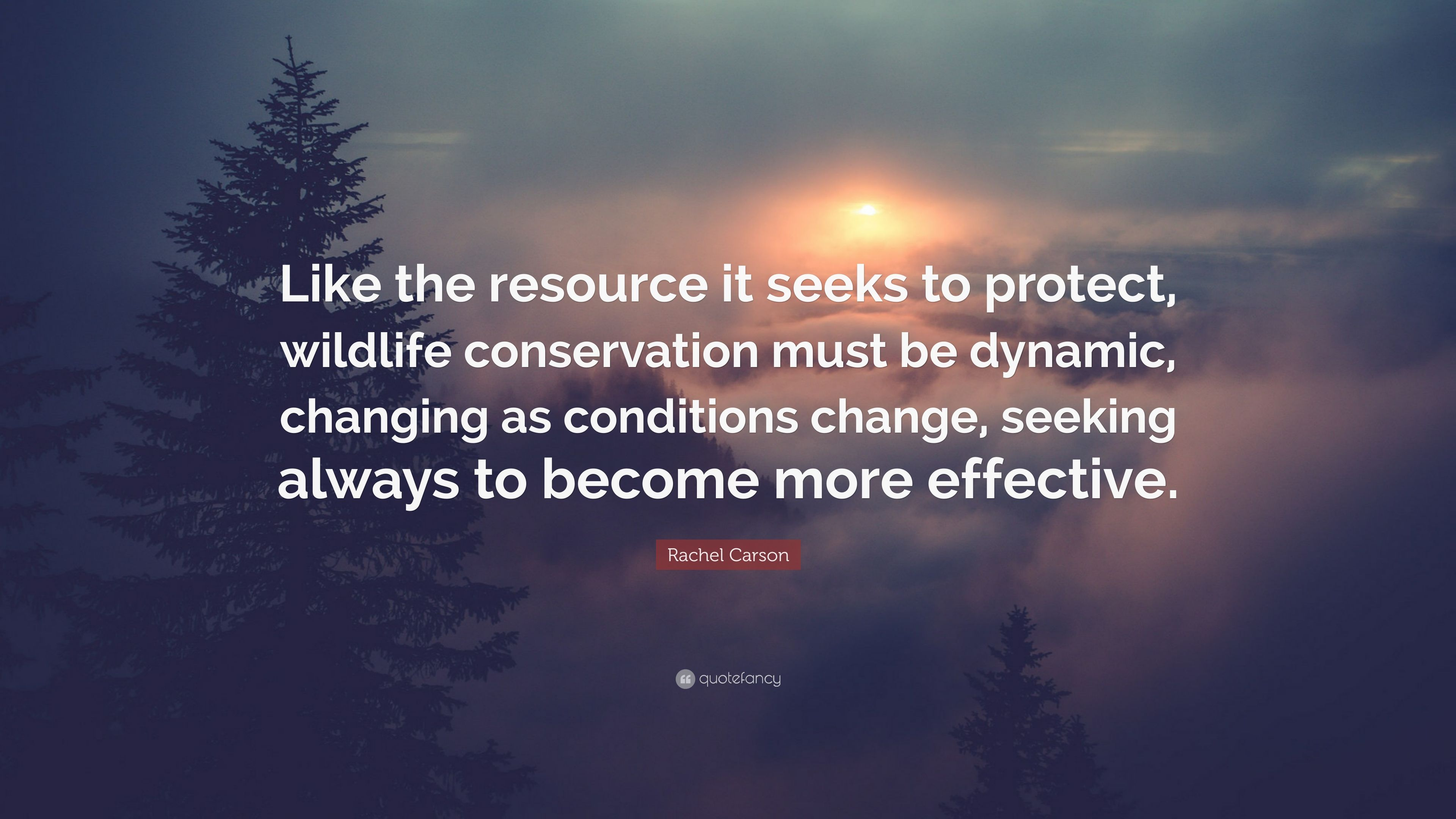 Rachel Carson Quote Like The Resource It Seeks To Protect