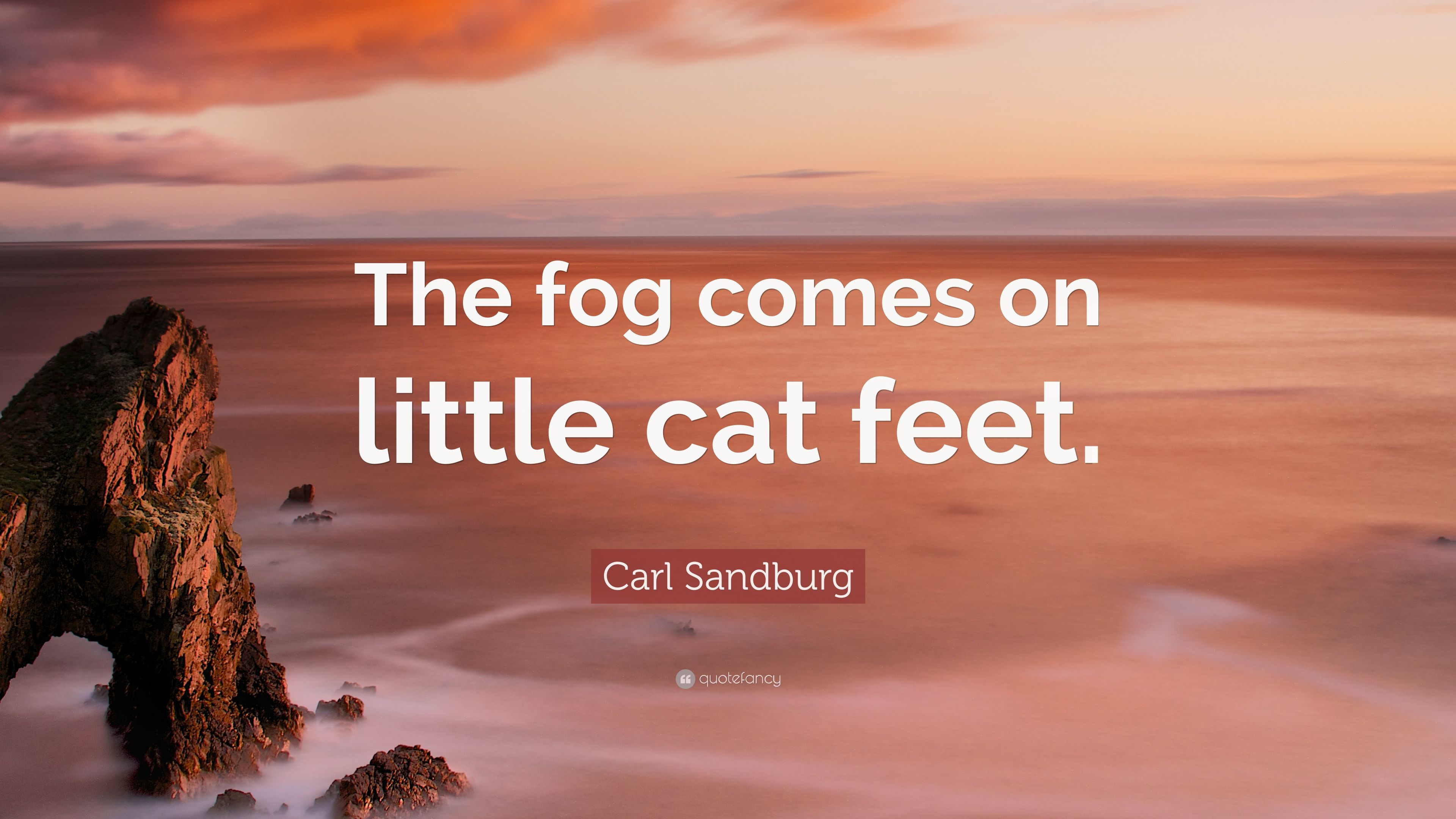 fog comes in on little cat feet