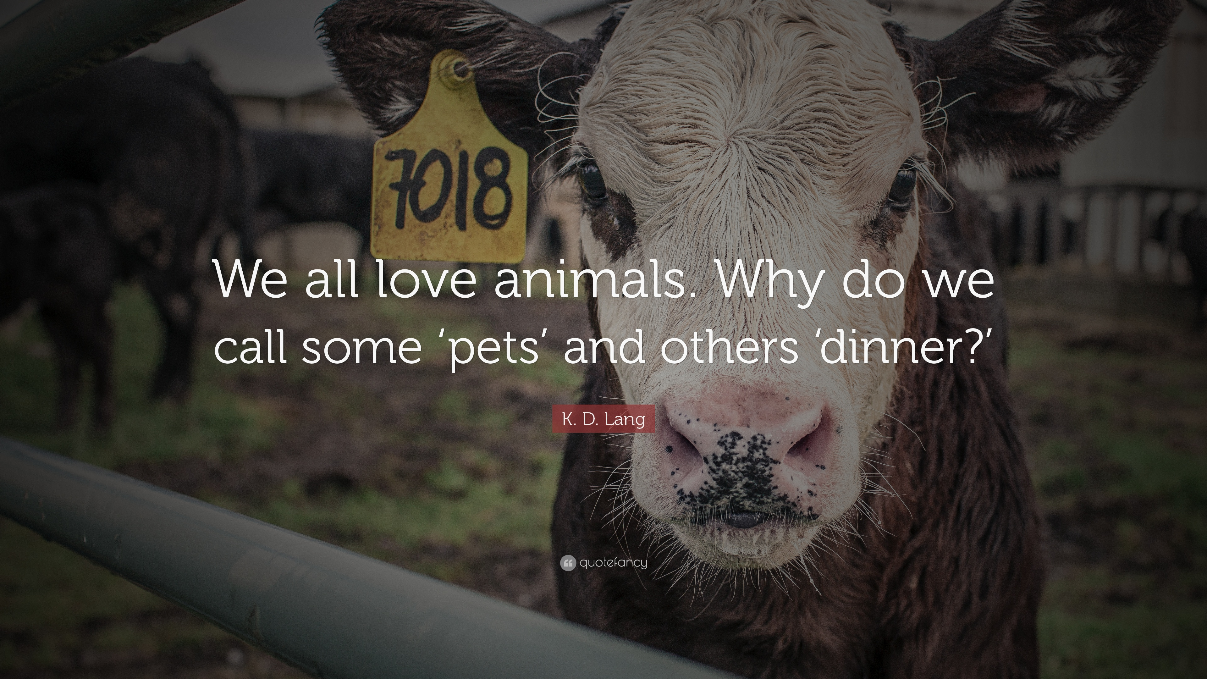 reasons why we love animals We humans absolutely adore animals and our animal companions we love how cute, fluffy, and all around adorable they are and just can't help but feel the love we'll just in case you needed a reminder as to why animals are so darn cute, this compilation will help you remember.