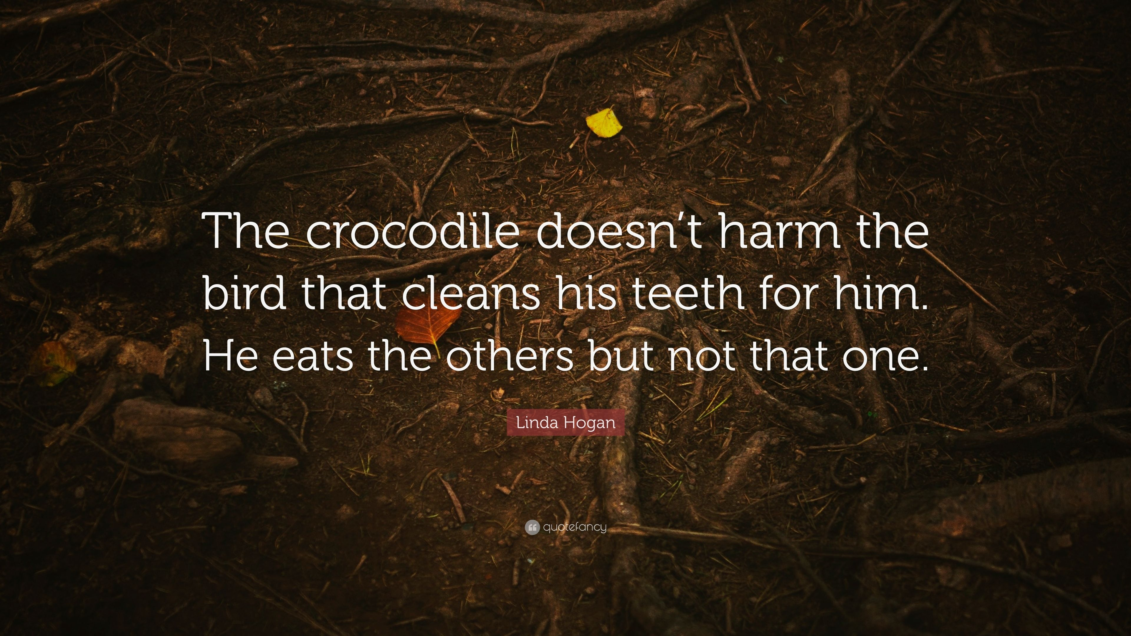 "uusin kokoelma 50% alennus jalkineet Linda Hogan Quote: ""The crocodile doesn't harm the bird that ..."